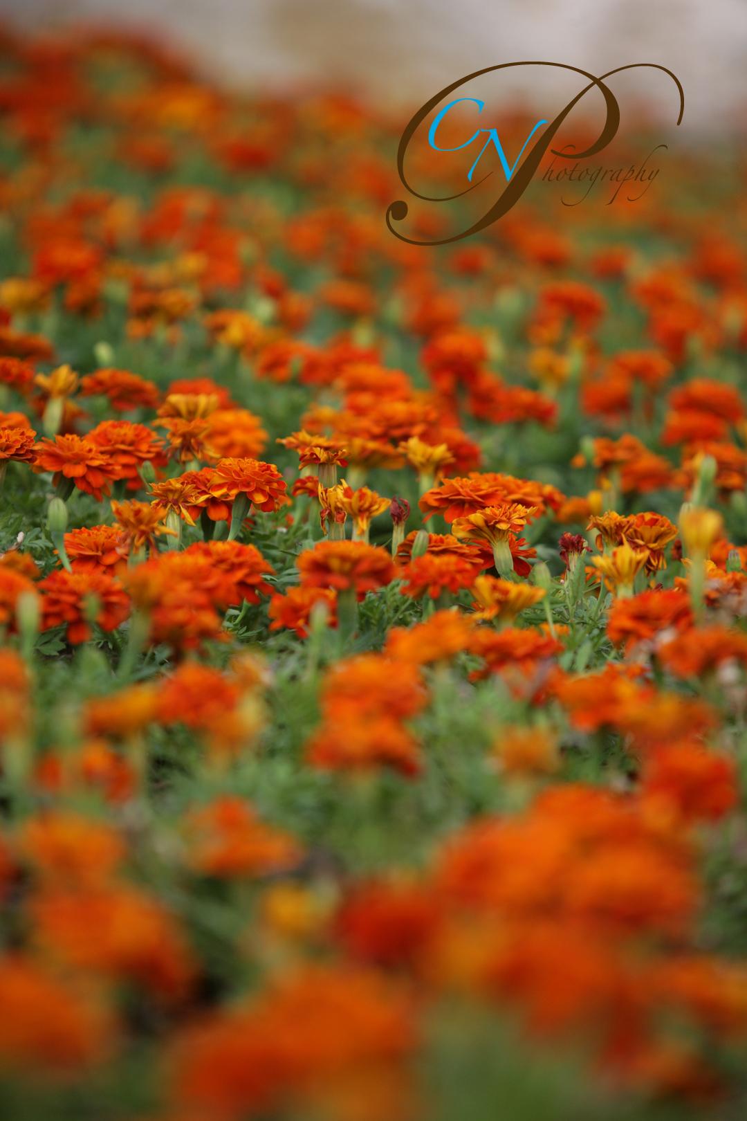 samiflowers_ret.jpg