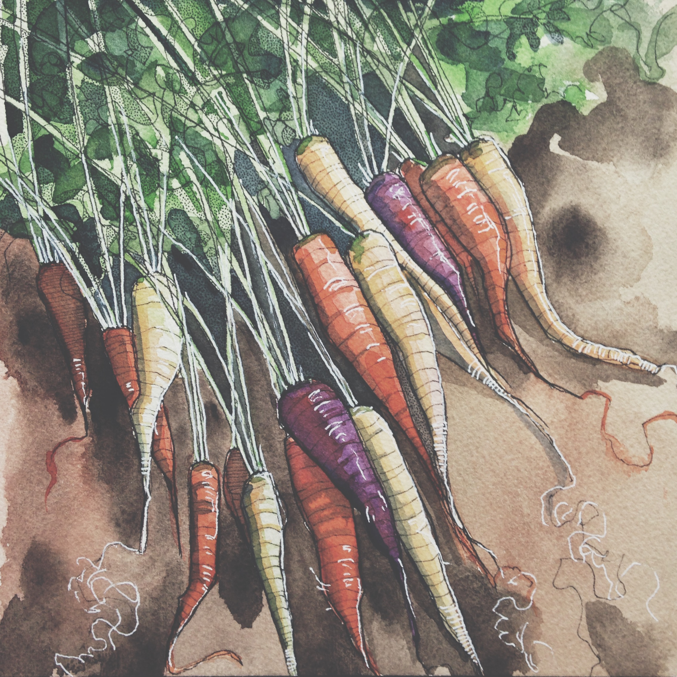 rainbow carrots, pen & watercolour on cold pressed paper, 8x8(in), SOLD, 2016