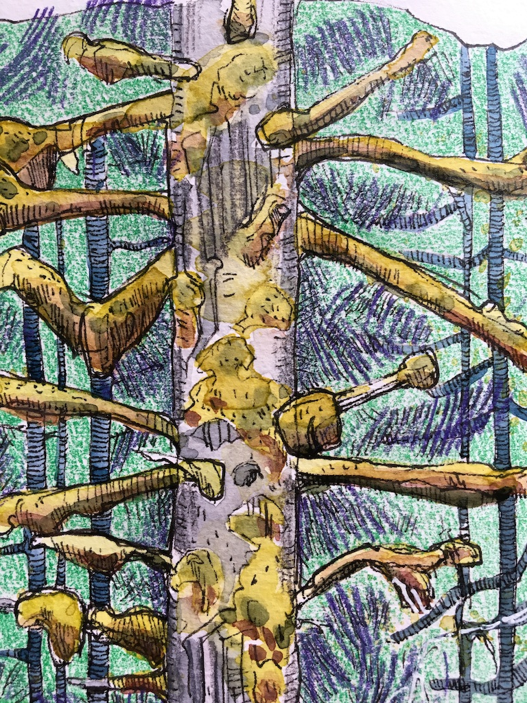 detail of moss covered tree sketch