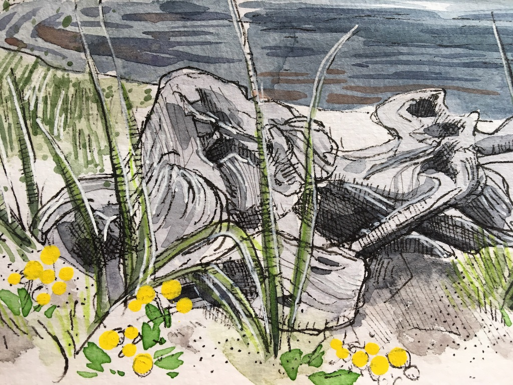 detail of driftwood sketch
