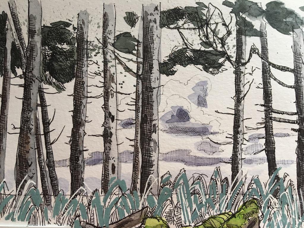 detail of agate beach tree sketch