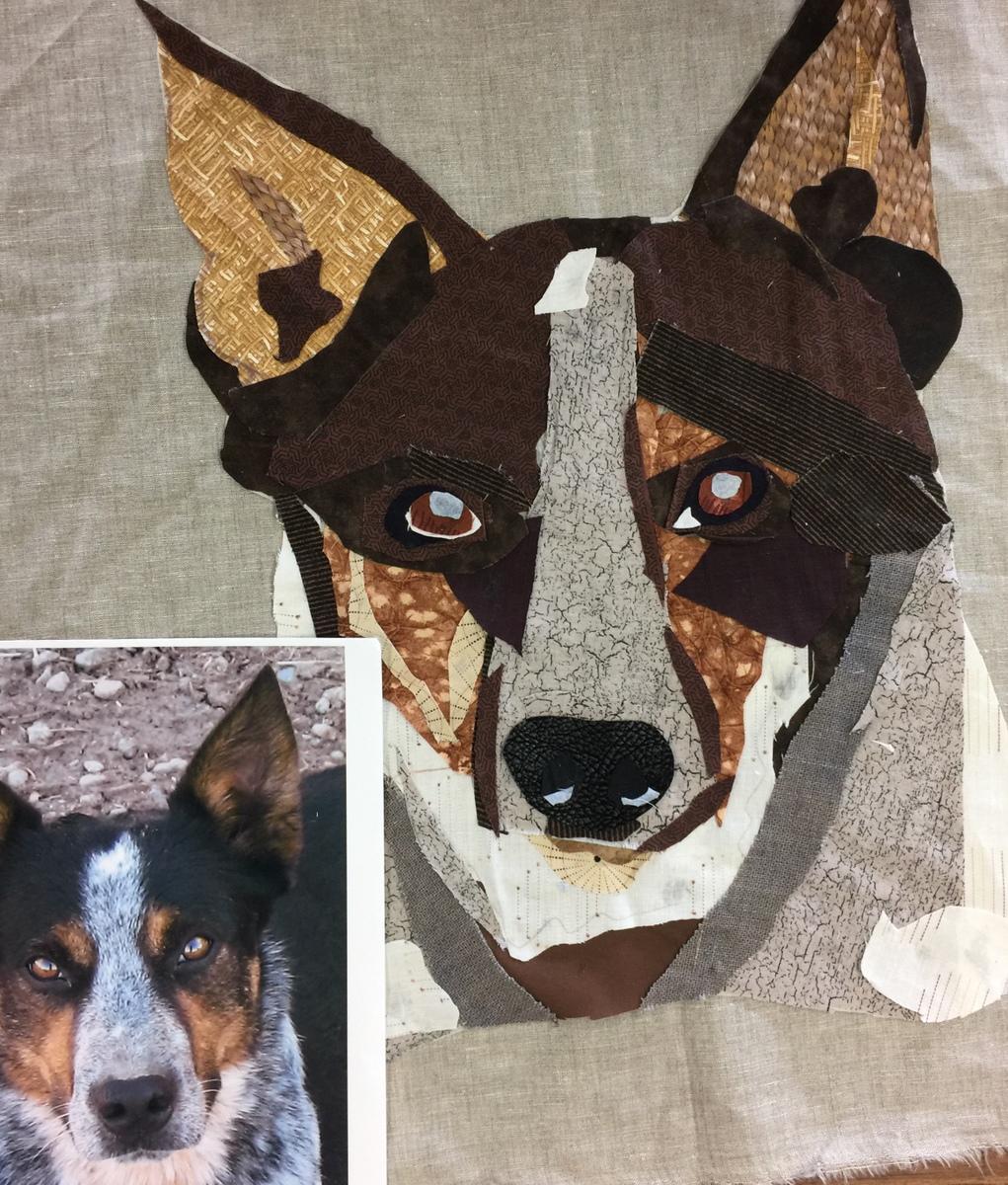 Australian Healer Dog