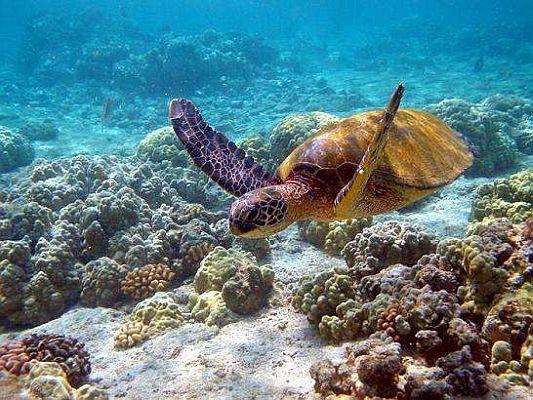 Crédito:    www.Islasgalapagos.org