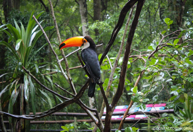 Parque Das aves foz de iguassú