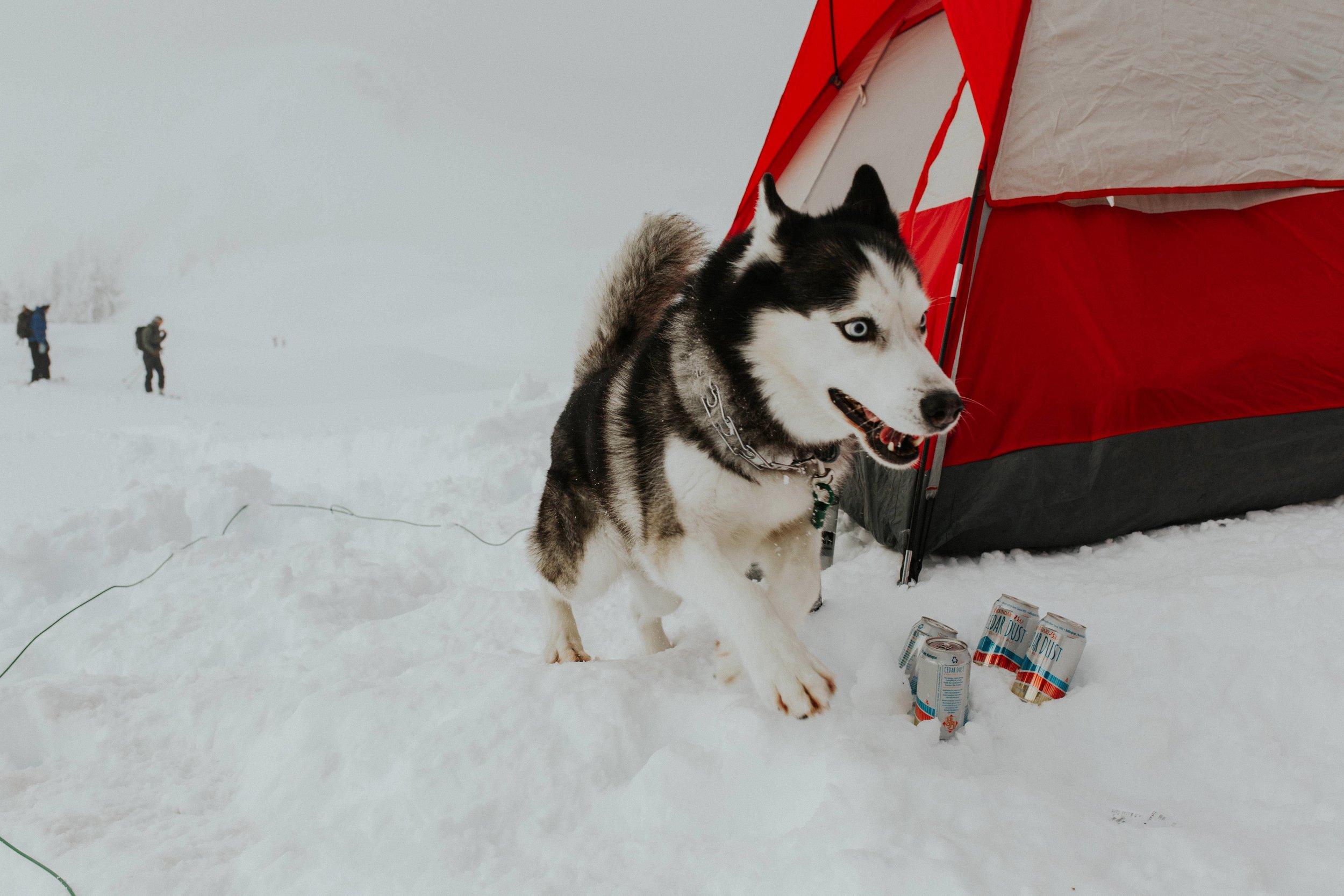 adventure-wedding-photographer-artist-point-snow-camping-elopement-photographer-husky-beer.jpg