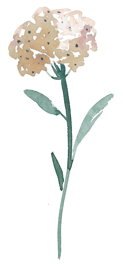 flower3 400px.png
