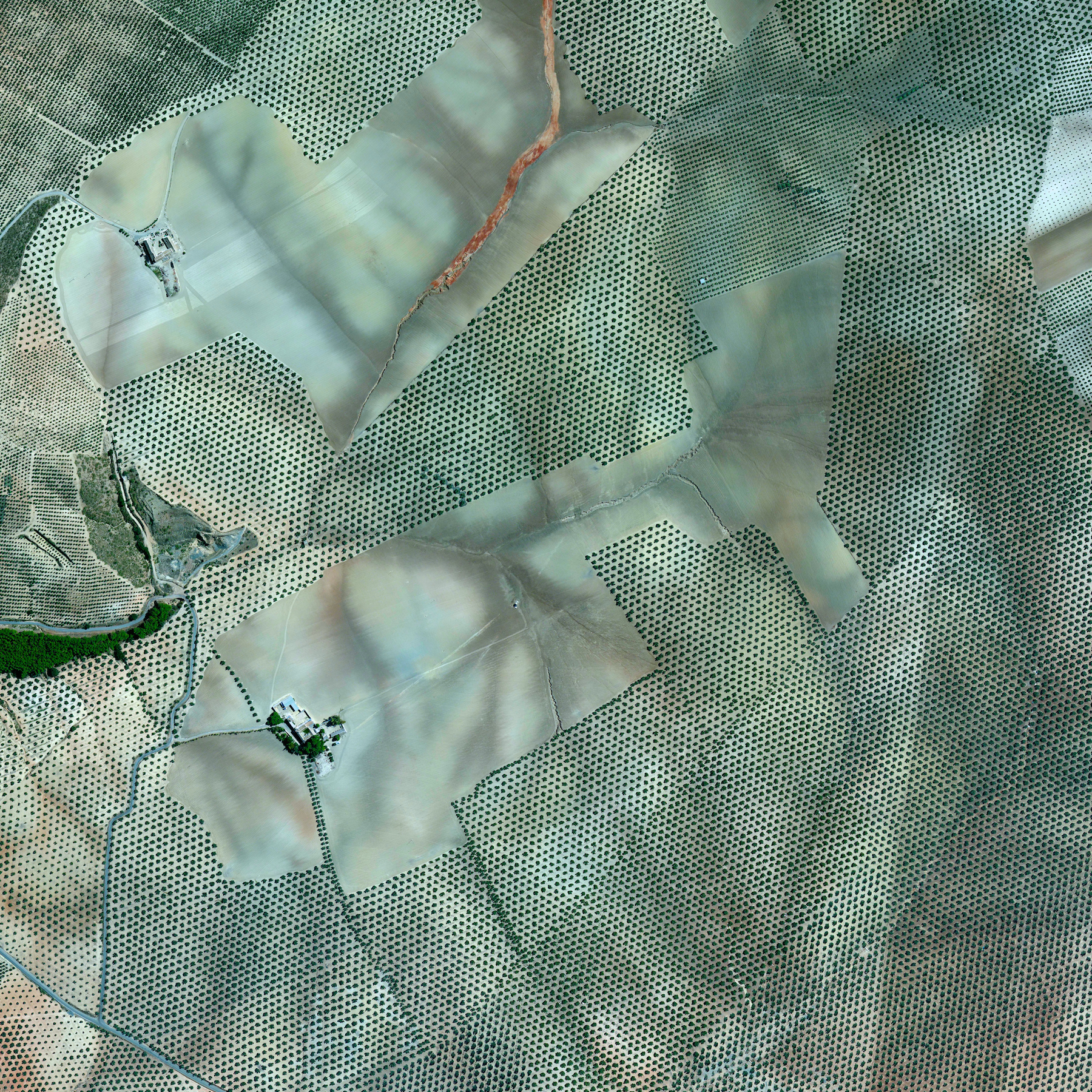 7/19/2015   Olive Tree Plantations    Córdoba, Spain   37.263212022°, -4.552271206°    Olive tree plantations covers the hills of Córdoba, Spain. Approximately 90% of all harvested olives are turned in to oil, while the 10% are eaten as table olives.