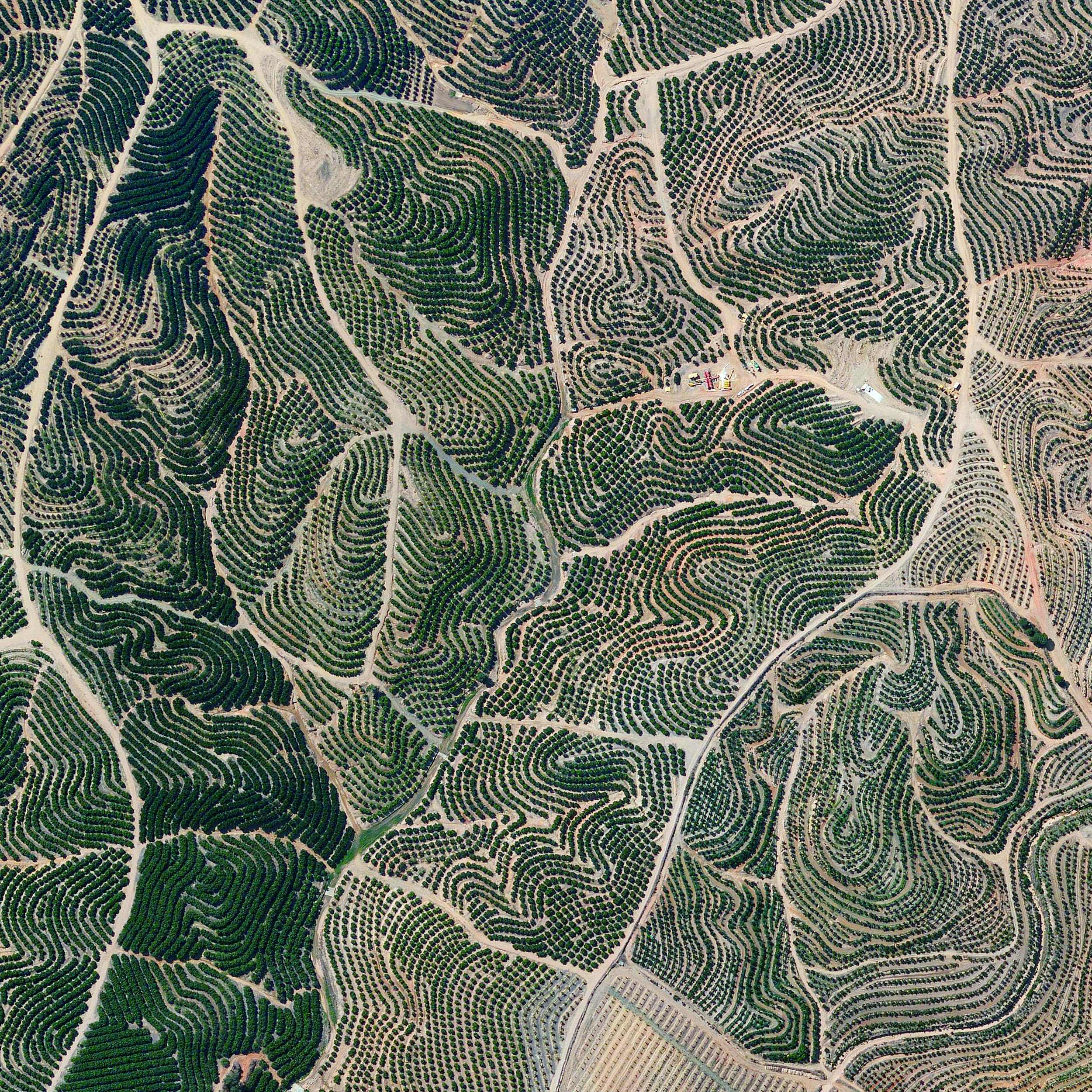 10/1/2015  Citrus trees  Isla Cristina, Spain  37.241136526°, -7.294464438°    Citrus trees cover the landscape in Isla Cristina, Spain. The climate is ideal for this growth with an average temperature of 64 degrees (18° celsius) and a relative humidity between 60% and 80%.