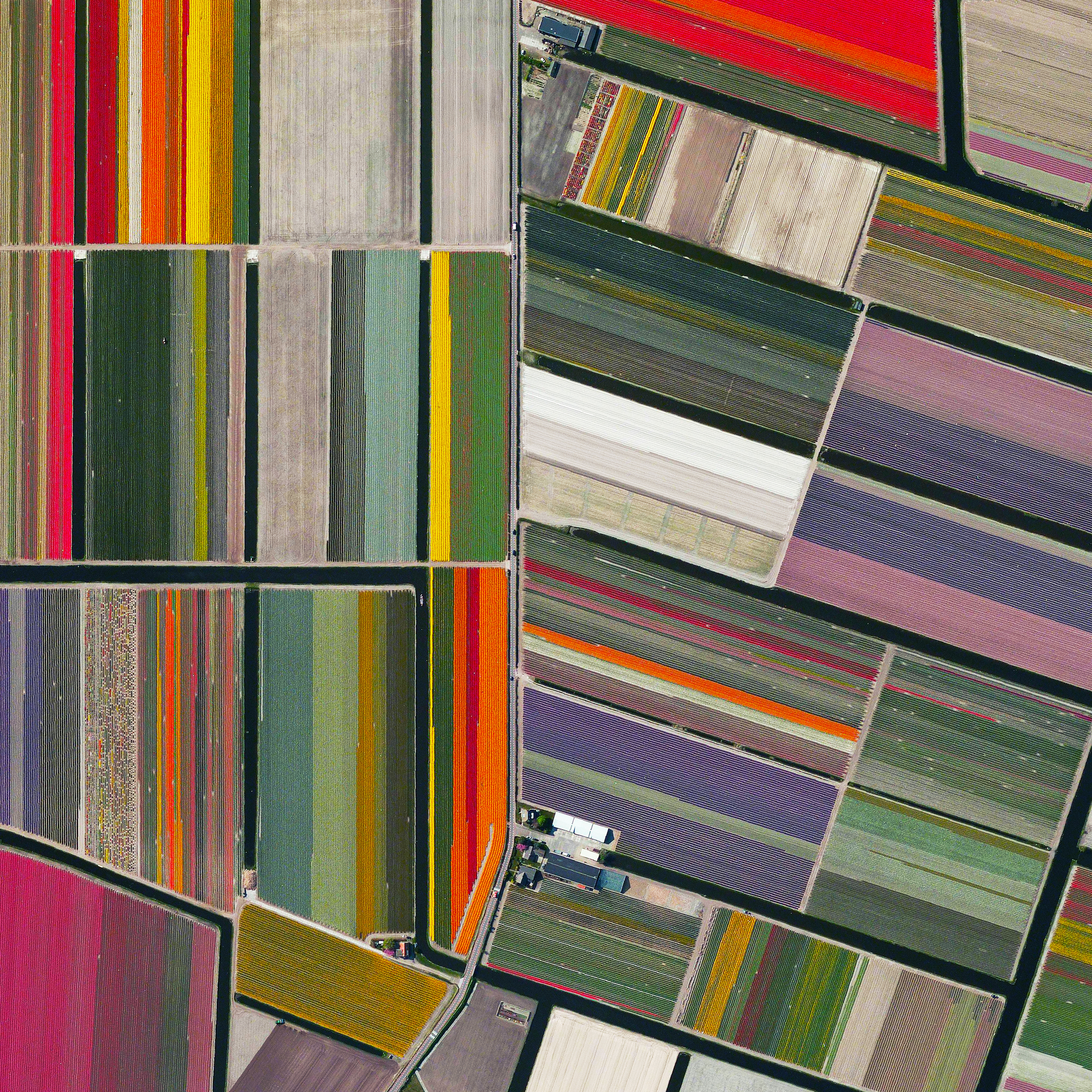 12/31/2015   Tulip fields   Lisse, Netherlands  52.276355786°, 4.557080790°    Here's our final favorite Overview from 2015 - tulip fields in Lisse, Netherlands. I hope everyone has a beautiful and colorful New Year. See you in 2016!