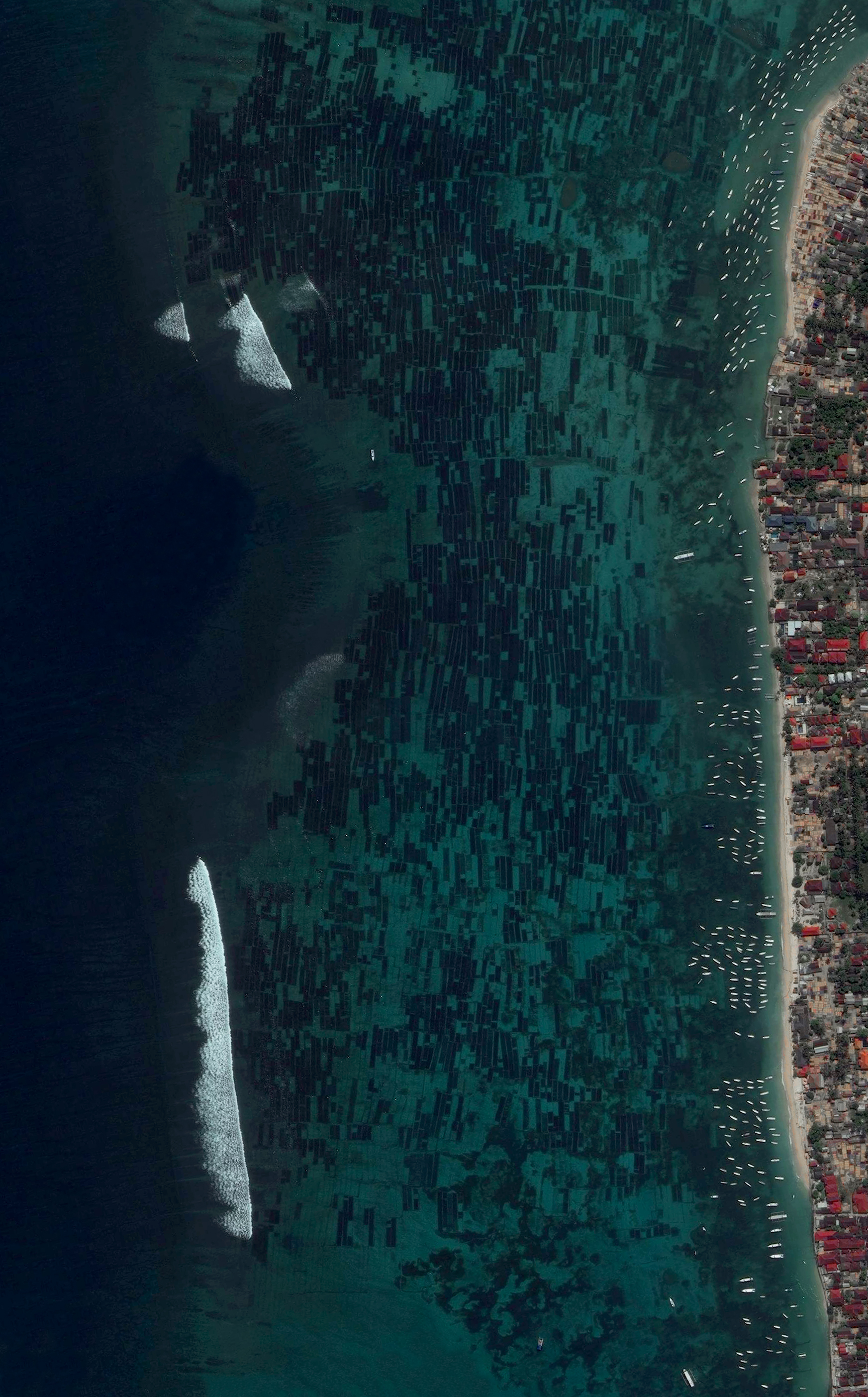 2/21/2016   Seaweed Farms   Nusa Lembongan, Indonesia  8°40.906′S 115°27.067′E    Seaweed farms on Nusa Lembongan – a small island located southeast of Bali, Indonesia – have an average harvest of 50,000 pounds per month. Once the seaweed is extracted from the water, it is dried by the sun for 3-7 days, depending on the season.