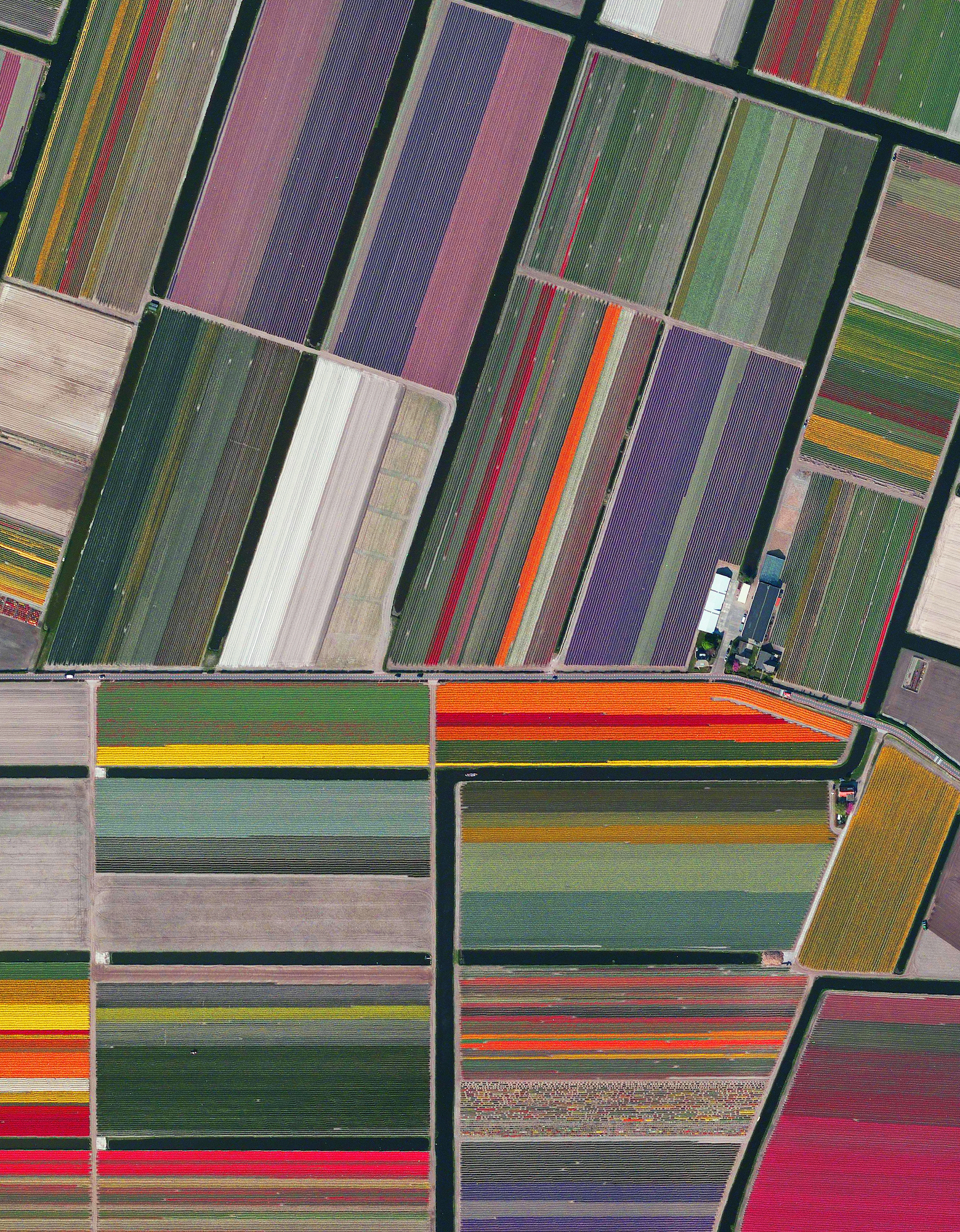 3/7/2016  Tulip Fields  Lisse, Netherlands  52.276355786°, 4.557080790°    Lines of colorful tulips in Lisse, Netherlands to honor the birthday of my favorite artist, Piet Mondrian! The Netherlands, where Mondrian was born on this day in 1872, produces 4.3 billion tulip bulbs every year. Mondrian is most well known for his paintings with straight black lines and blocks of the three primary colors.
