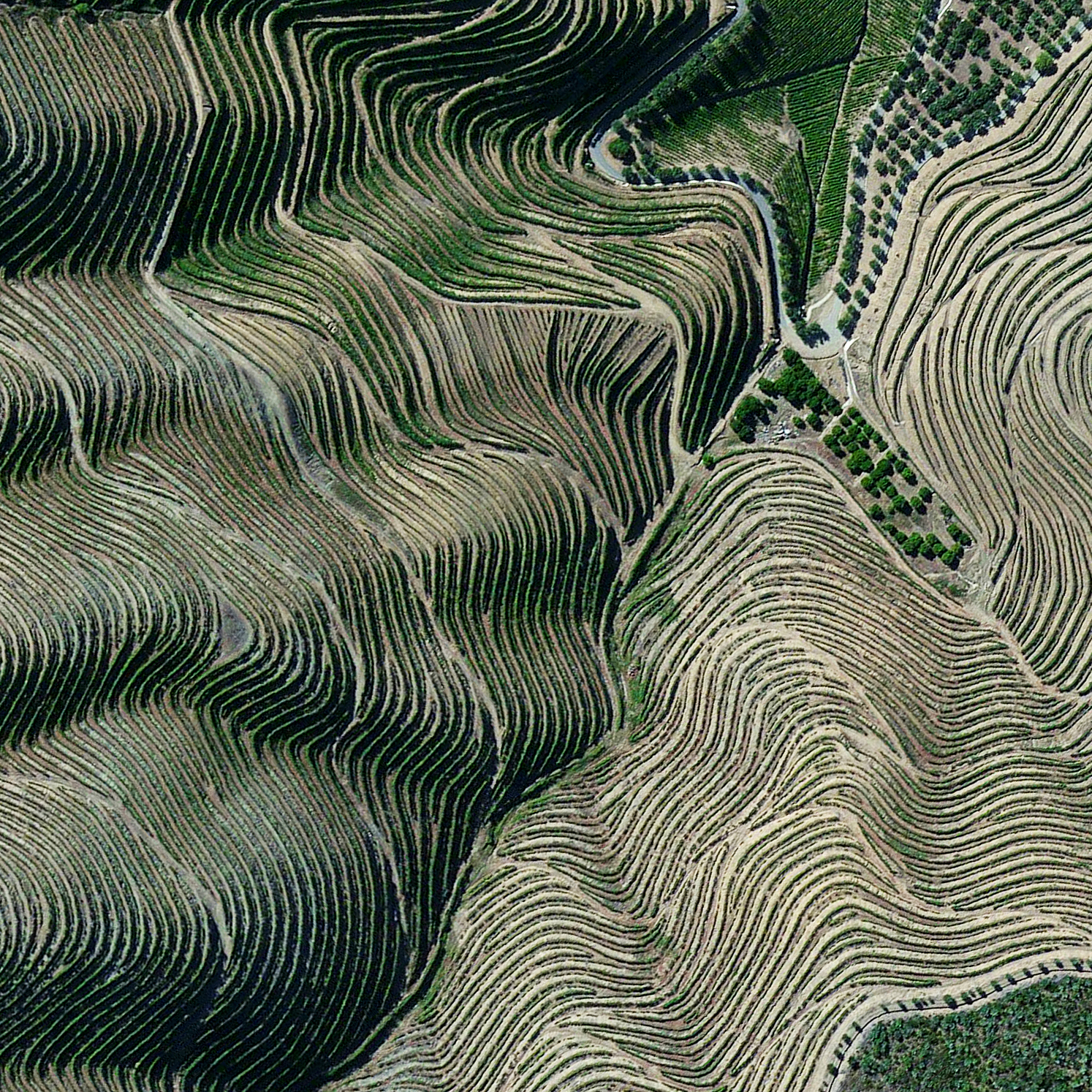 3/20/2016  Port Vineyards   Douro Valley, Portugal   41.167121280°, -7.773068522°    Terraced hillsides are seen in the Douro Valley of northern Portugal. The steep slopes are covered with of grape vines that rise from the Douro River below. The region is recognized as the home of port wine - a sweet, red wine that is often served with dessert.