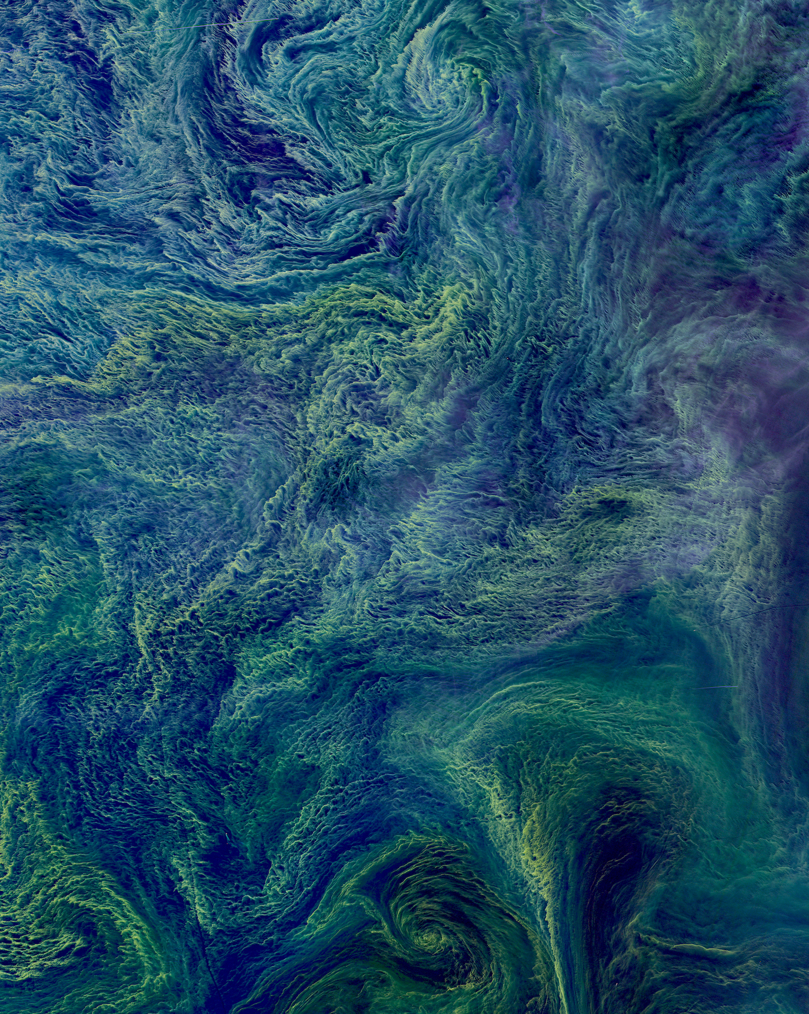 Before you even ask, this is indeed a real image of Earth! In August 2015 a massive bloom of cyanobacteria - more than 100 square kilometers - was seen in the Baltic Sea. Cyanobacteria are a type of marine bacteria that capture and store solar energy through photosynthesis. While some are toxic to humans and animals, large blooms can cause an oxygen-depleted dead zone where other organisms cannot survive. Scientists believe that blooms are more likely to form in the presence agricultural and industrial run-off or from cruise ships that provide excessive nutrients for the bacteria through the dumping of sewage.  Source imagery: NASA