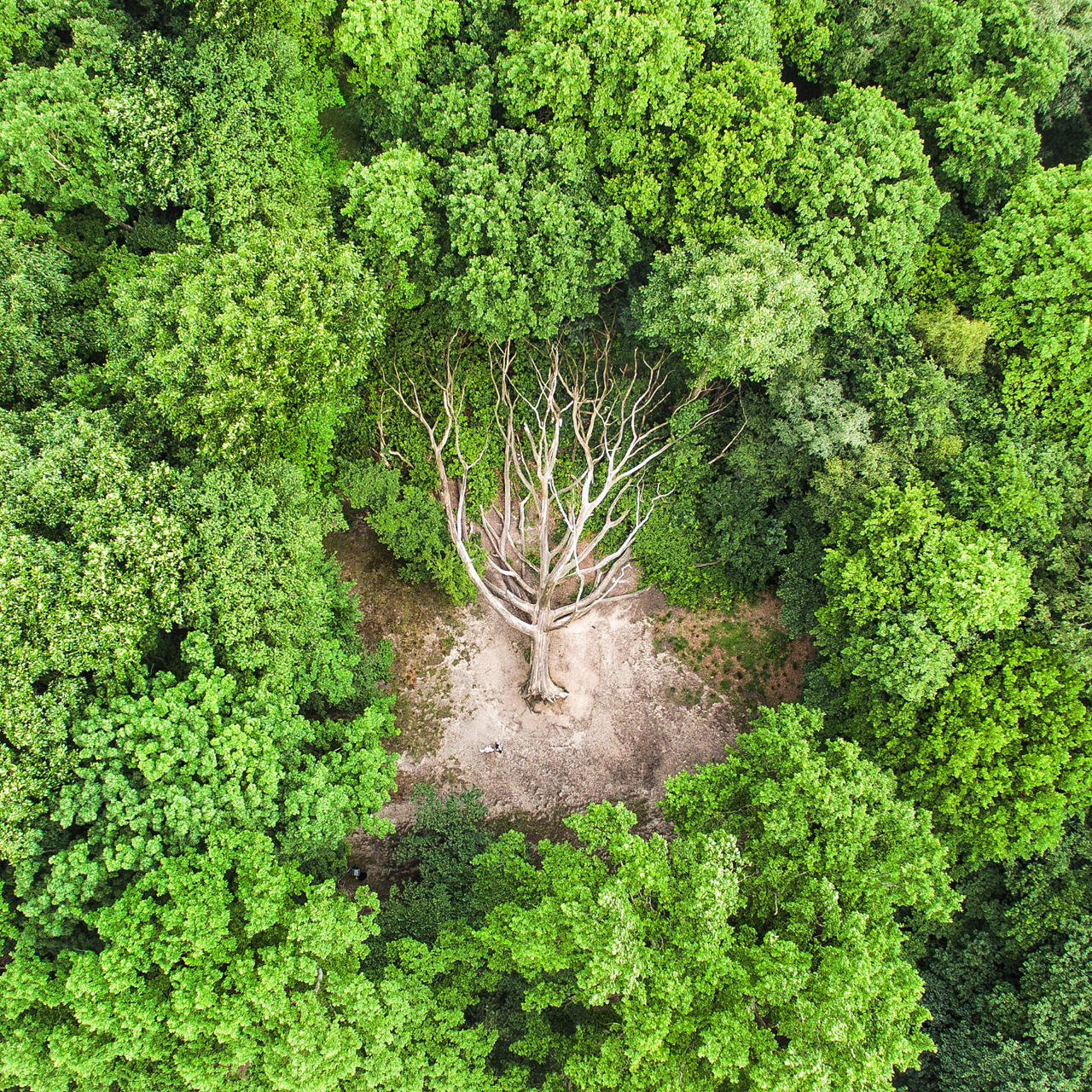 Check out this incredible shot of a fallen tree in Hampstead Heath. The park is located in North London and the expansive area, covering nearly 800 acres, offers a natural sanctuary from the bustling city. This tree was felled during a storm two winters ago, leaving a hole in the canopy where it once stood.  Photo by Kit Oates