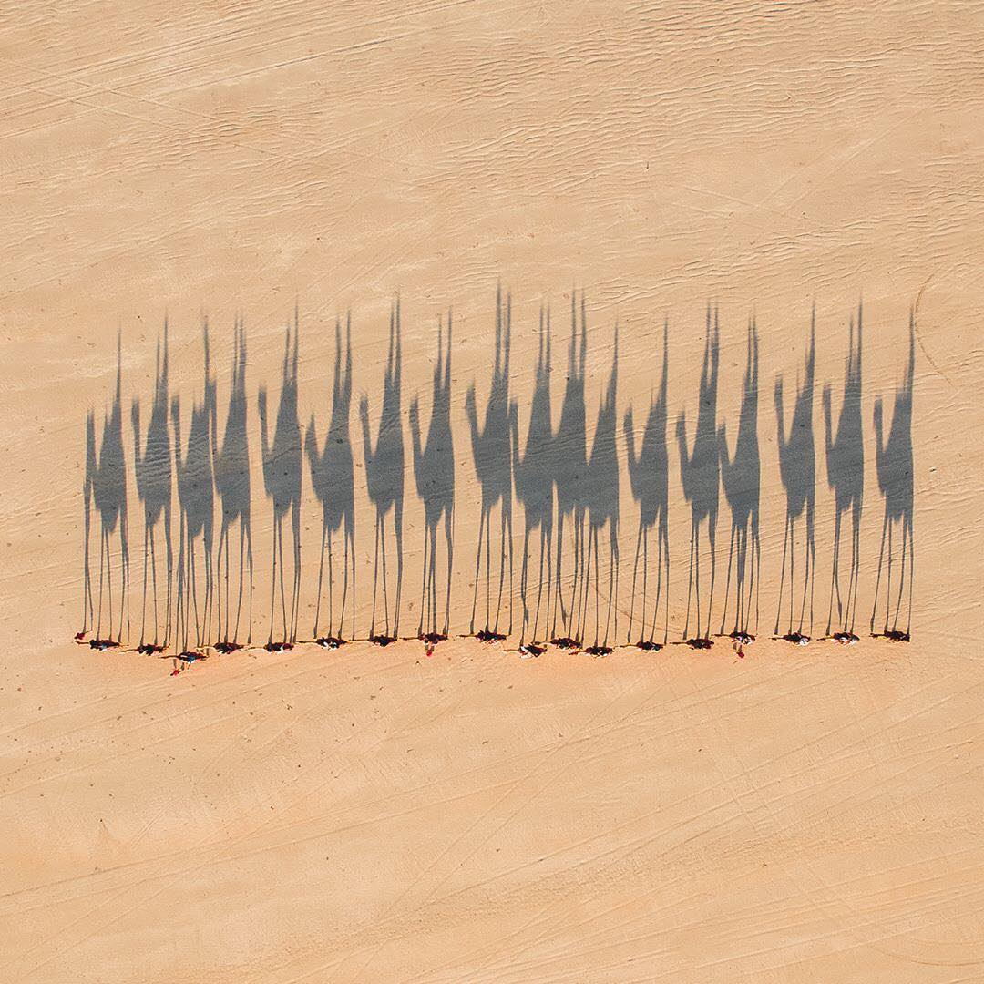 """In this week's """"Drone Sunday"""" post from From Where I Drone, a caravan of camels is herded across the Australian Outback, casting shadows on the barren terrain. Between 1870 and 1920, roughly 20,000 camels were brought to Australia from India, Afghanistan, and the Arabian Peninsula. Today, the country's feral camel population is between 1 and 1.2 million, and is considered a nuisance to Outback communities. For more awesome drone imagery, follow From Where I Drone!  26°47'56.9""""S, 137°44'02.3""""E  Source imagery: Jarrad Seng Photography"""