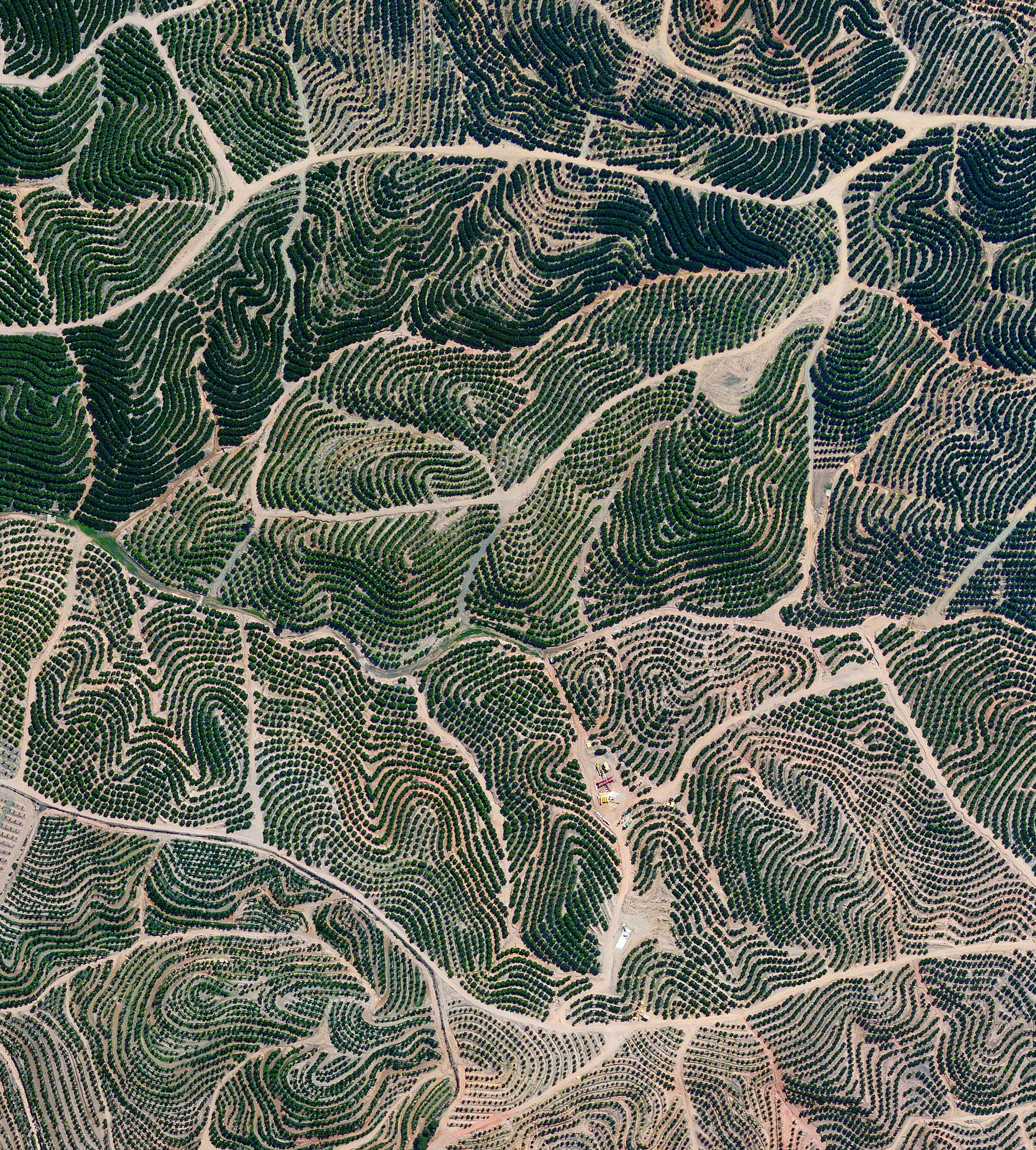 """Citrus trees create fingerprint-like patterns on the landscape in Isla Cristina, Spain. The climate in this region is ideal for citrus growth, with an average temperature of 64 degrees Fahrenheit (18°C) and a relative humidity between 60% and 80%.  37°14'28.1""""N, 7°17'40.1""""W  Source imagery: DigitalGlobe"""