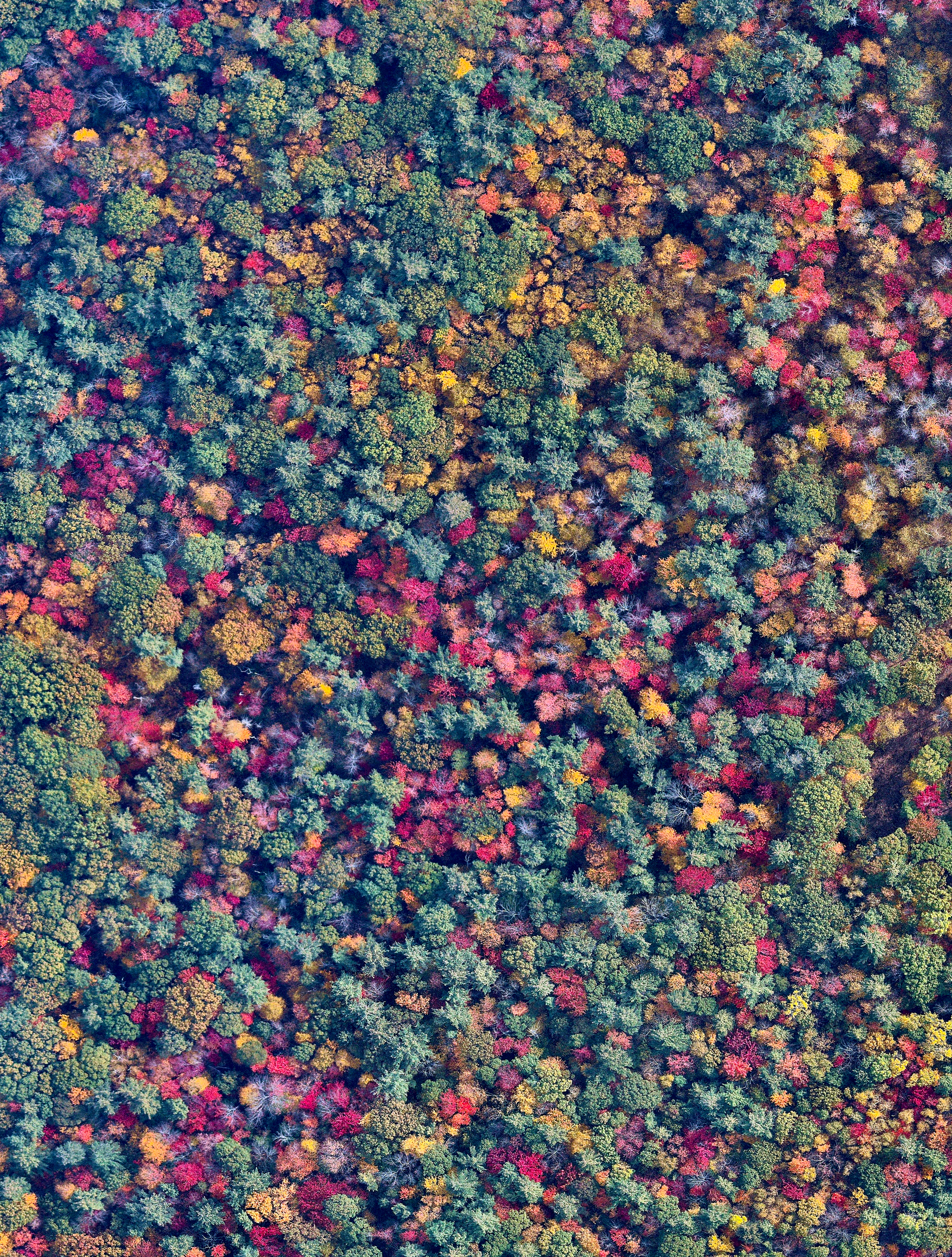 """Check out this stunning shot that we just added to our Printshop of fall foliage in New Hampshire! Head over to our  Printshop  today to see what's available and use the discount code """"FALL20"""" for 20% off any order this month. This Overview captures an incredible blanket of tones in the trees of Bow, New Hampshire. With the arrival of colder temperatures, leaves begin to change their colors, creating this marvelous view from above.  43°07'39.5""""N, 71°32'36.5""""W  Source imagery: Nearmap"""