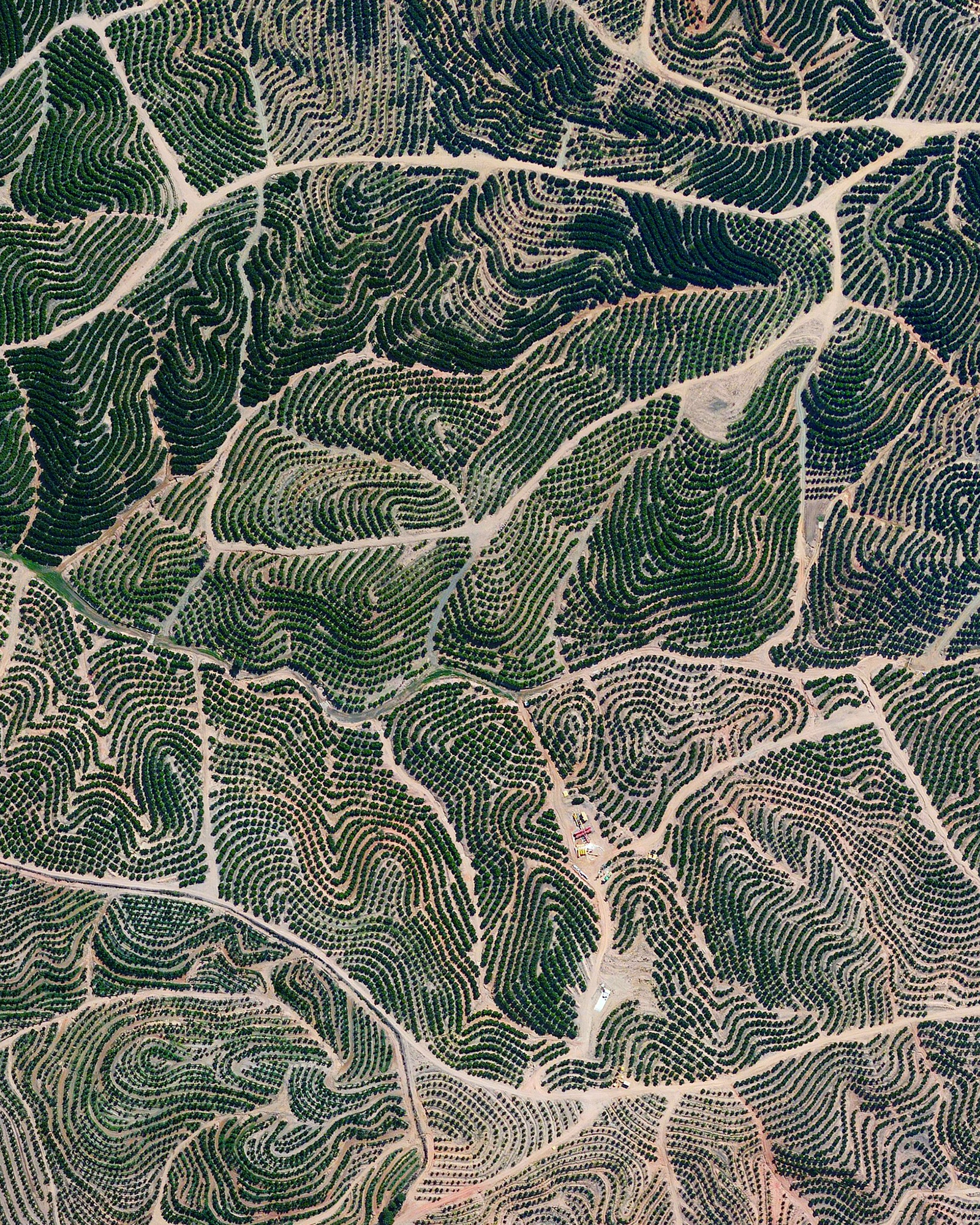 Citrus trees cover the landscape like fingerprints in Isla Cristina, Spain. The climate in this region is ideal for the growth of this produce with an average temperature of 64 degrees (18° celsius) and a relative humidity between 60% and 80%.  37.241139, -7.294472  Source imagery: Maxar Technologies