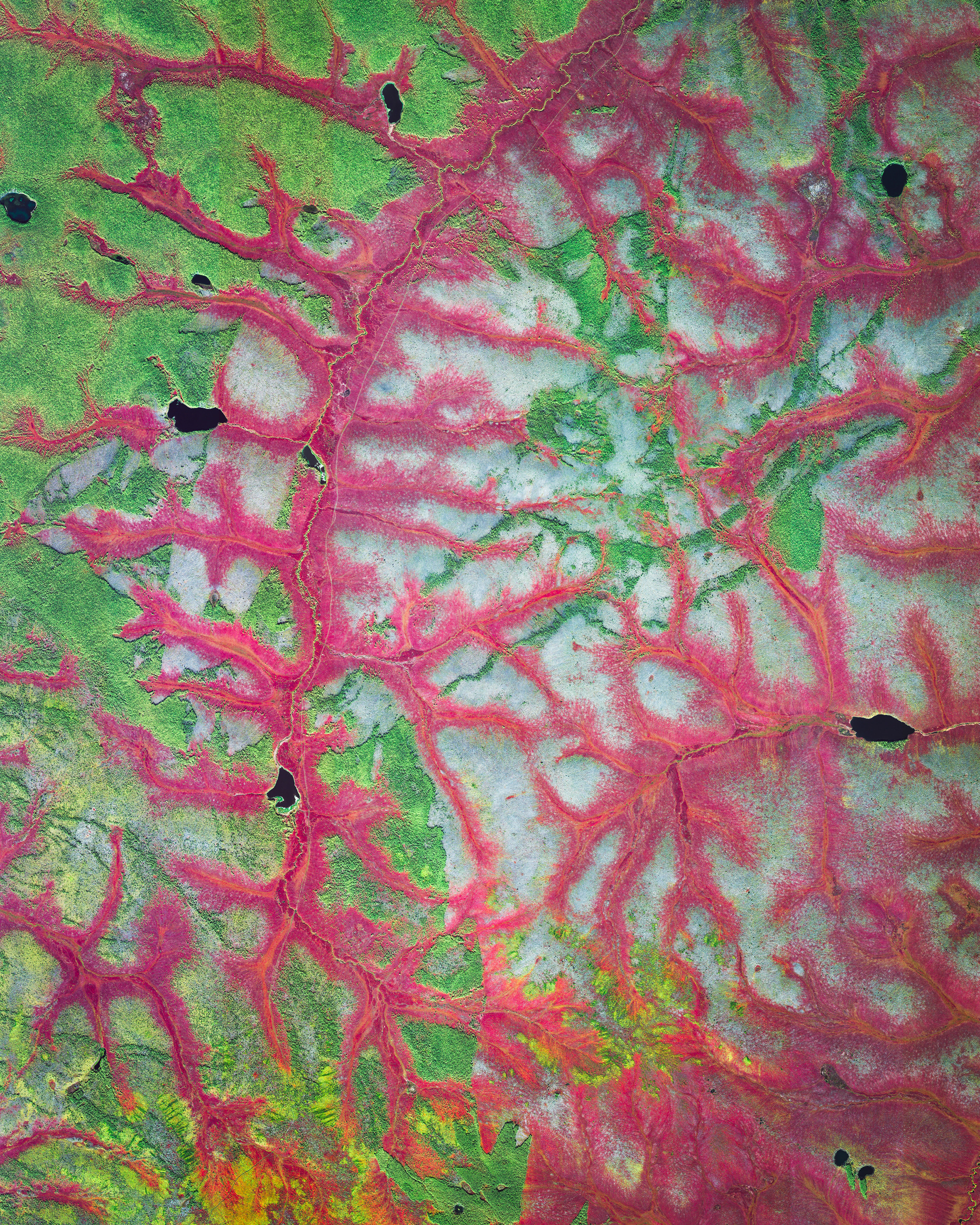 This Overview shows vibrantly colored lichens and mosses in Russia's Sakha Republic, also known as Yakutia. This vegetation provides sustenance for reindeer, which many locals rely on for milk and meat. This particular area is located in the Arctic Circle, roughly 650 miles (1,046 km) northeast of Yakutsk — the Republic's capital city — and has an average January temperature of -41.3 °F (-40.7 °C).  67.875700°, 147.106200°  Source imagery: Maxar Technologies