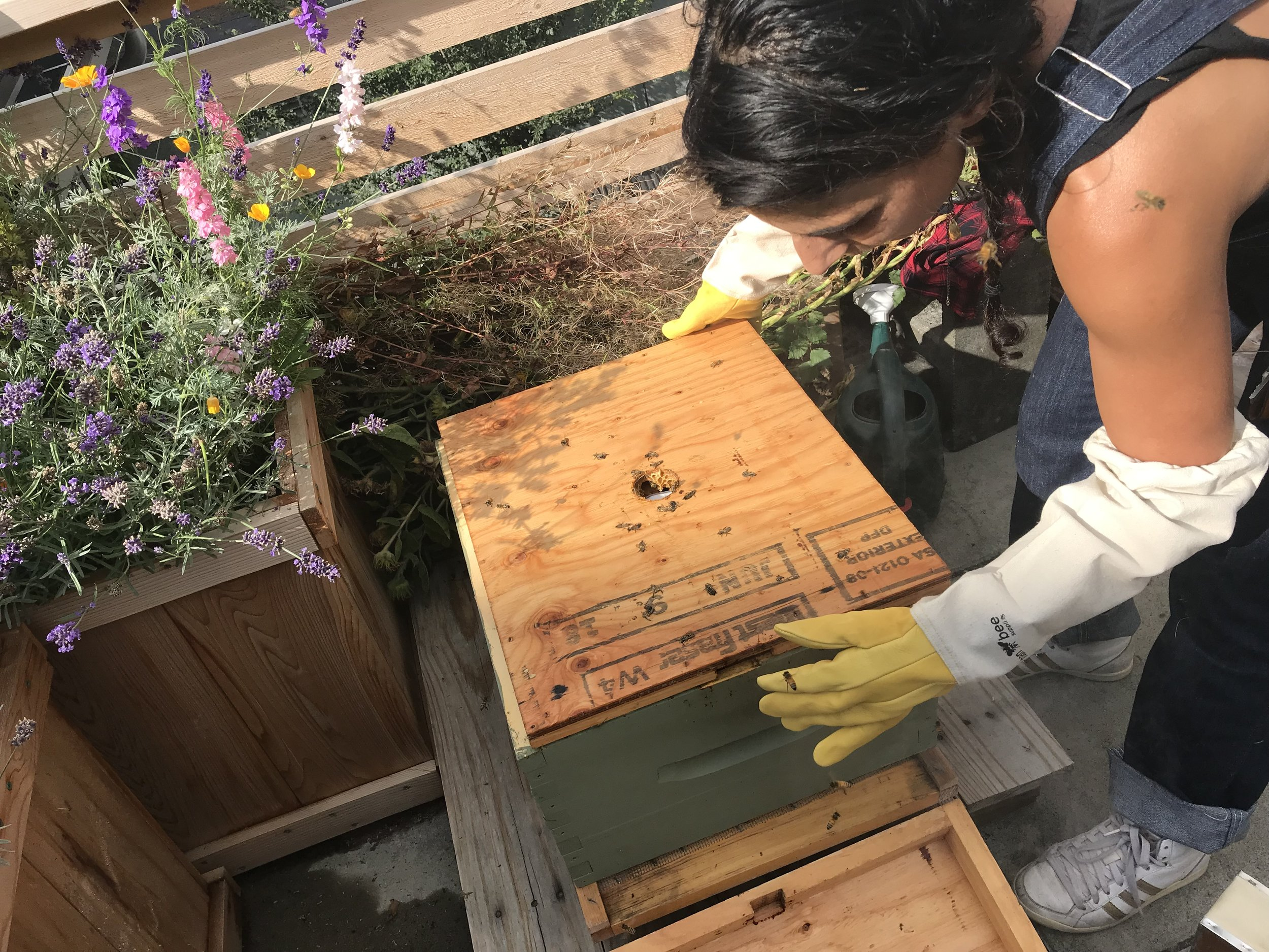 Winterizing the Cultch Bees