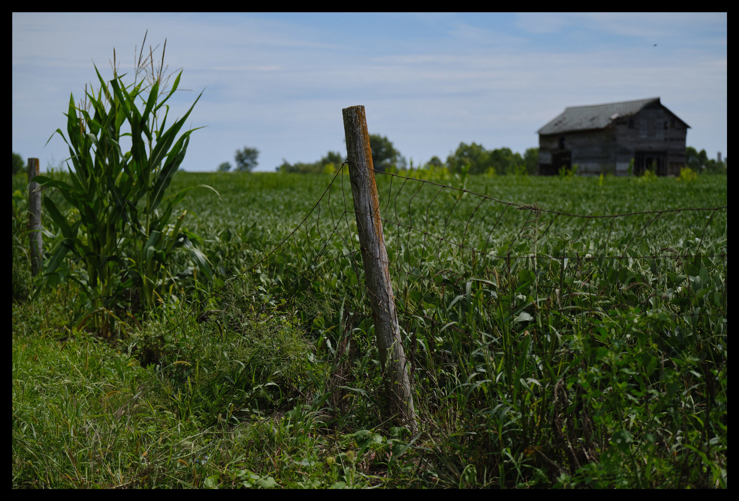 Fence Post, County Rd A