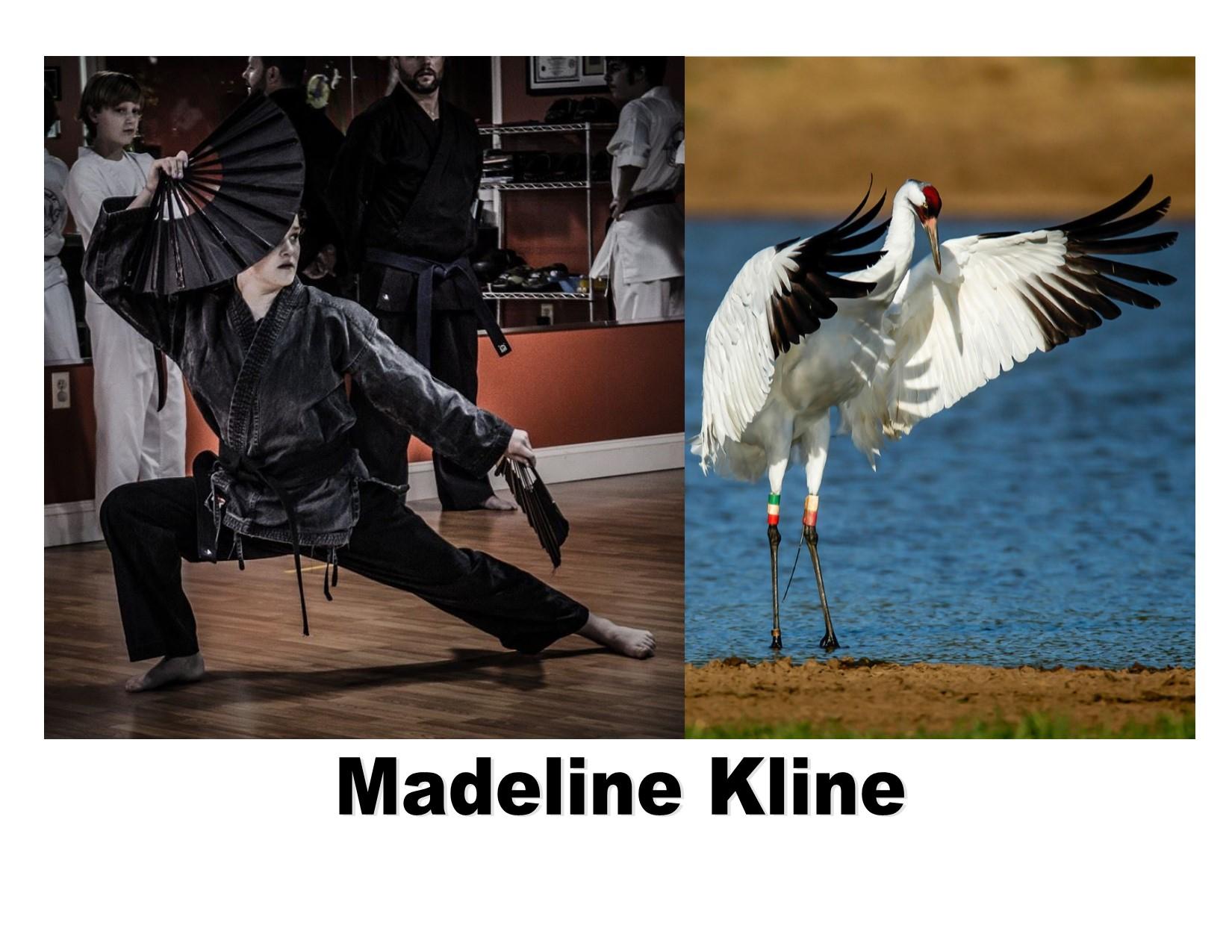 Madeline crane spirit animal.jpg
