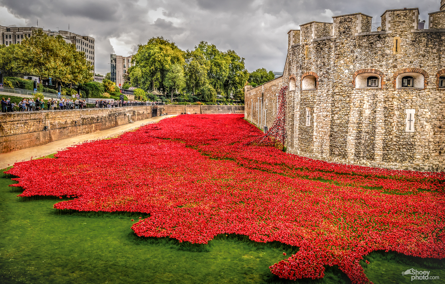 The Tower of London Poppies.