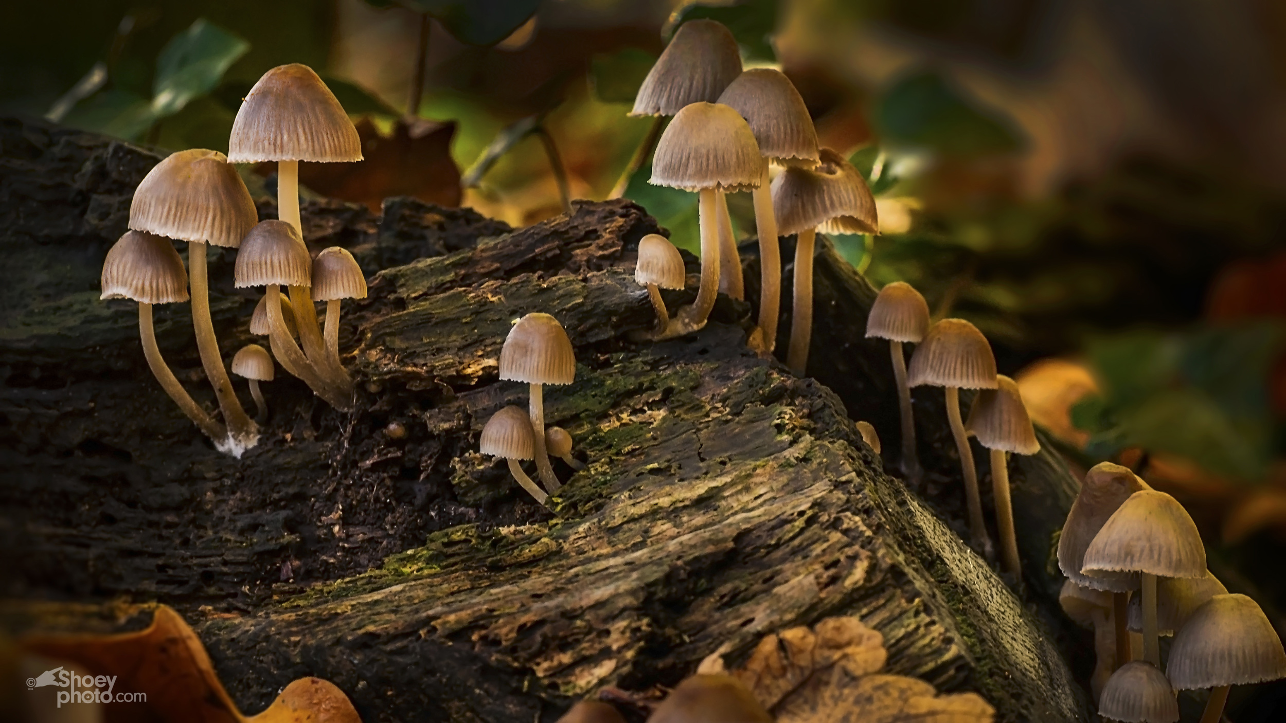 Woodland Fungi Group.jpg