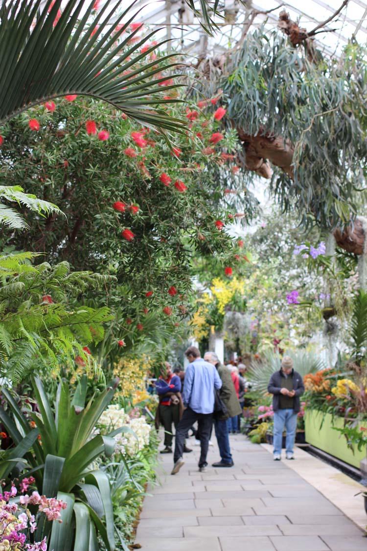 New York Botanical Garden Orchid Show; Image: Laura Messersmith