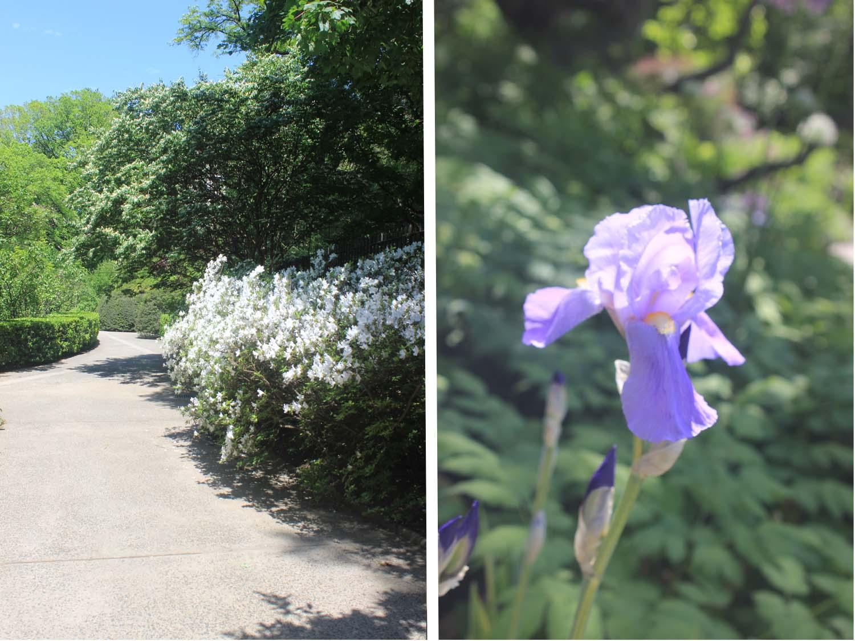 Central Park Conservatory Garden | Image: Laura Messersmith