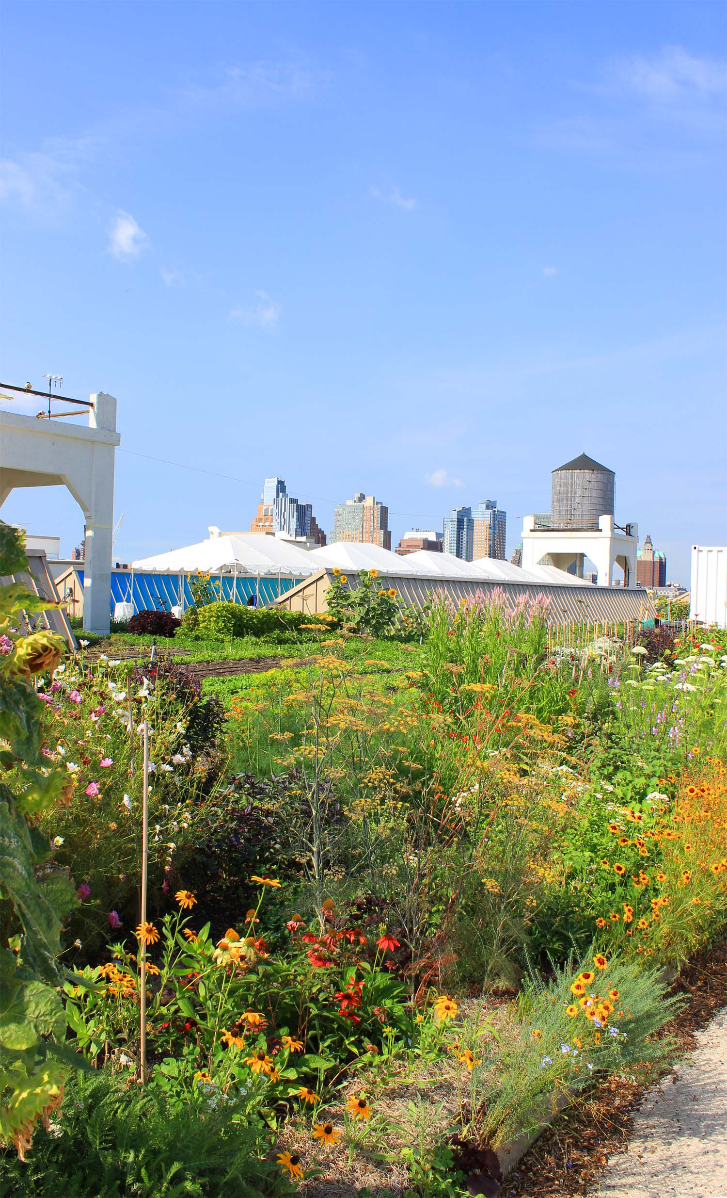 Brooklyn Grange Farm, Brooklyn Navy Yard  | Image:  Laura Messersmith