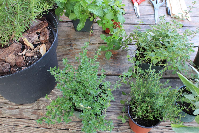 Herbs    Image:  Laura Messersmith