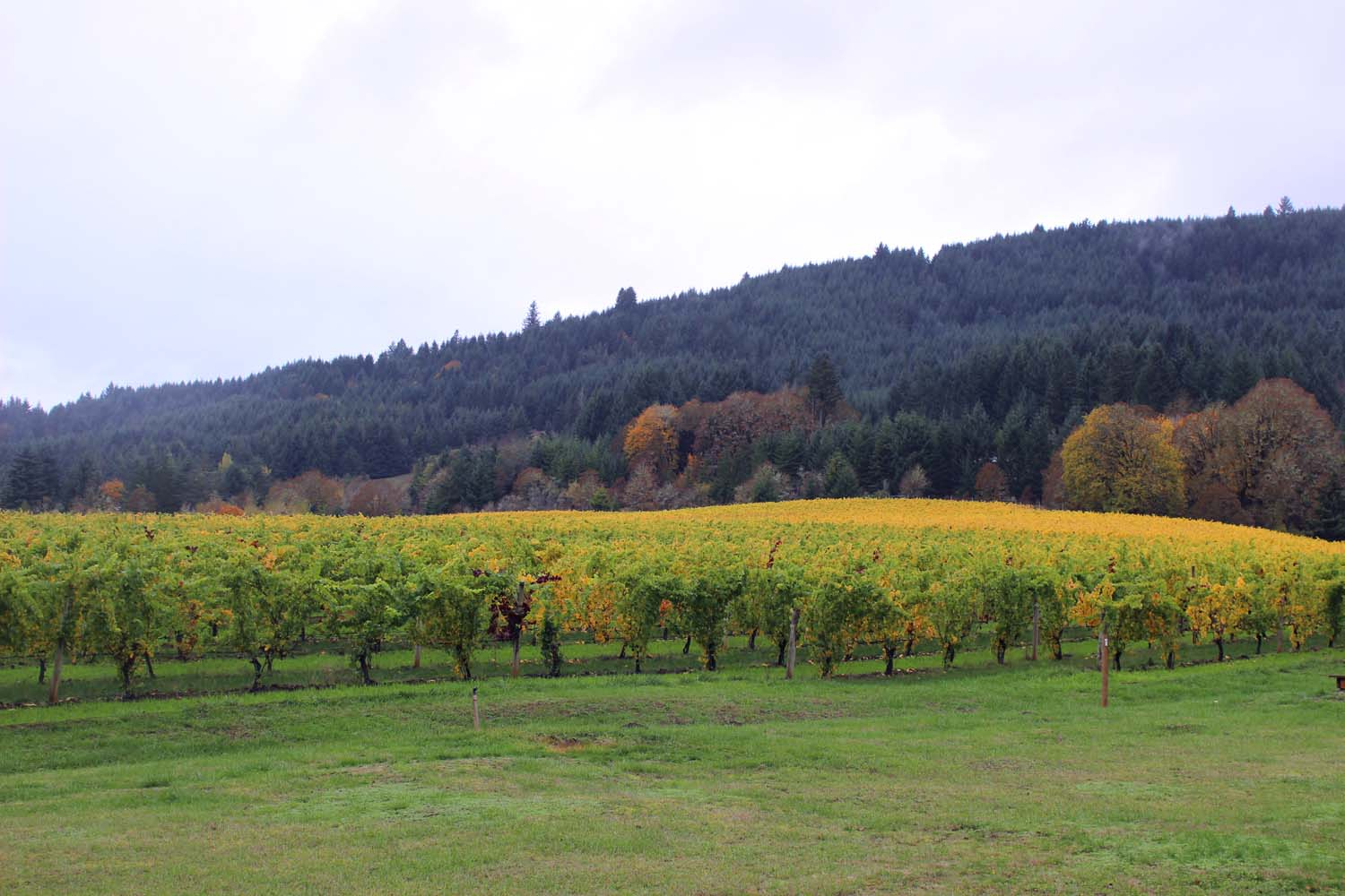 Willamette Valley Wine Country, Oregon     Image:  Laura Messersmith