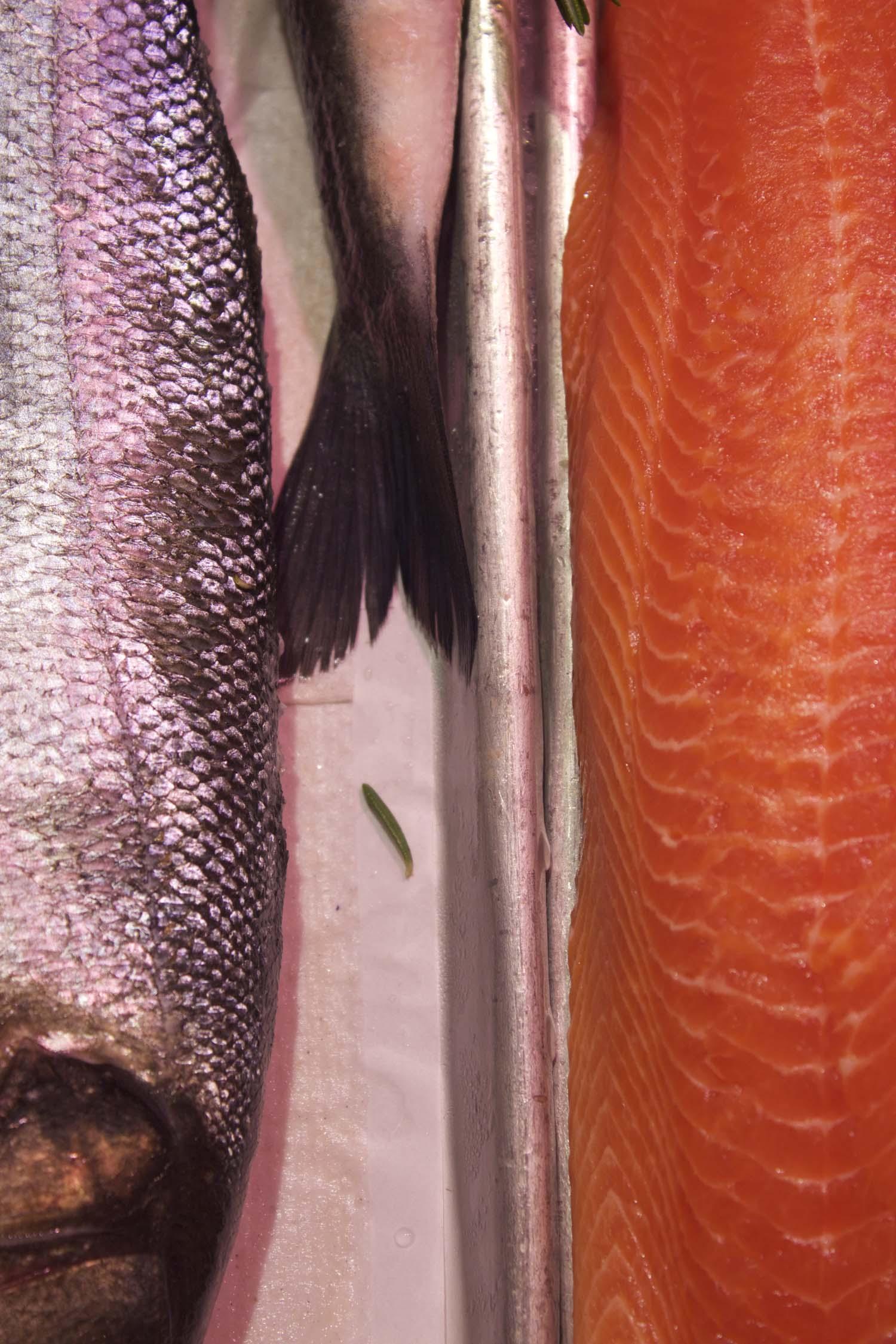 Fish | Image: Laura Messermith