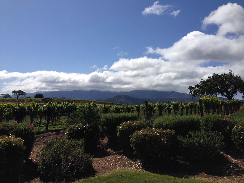 California Wine Country | Image: Laura Messersmith