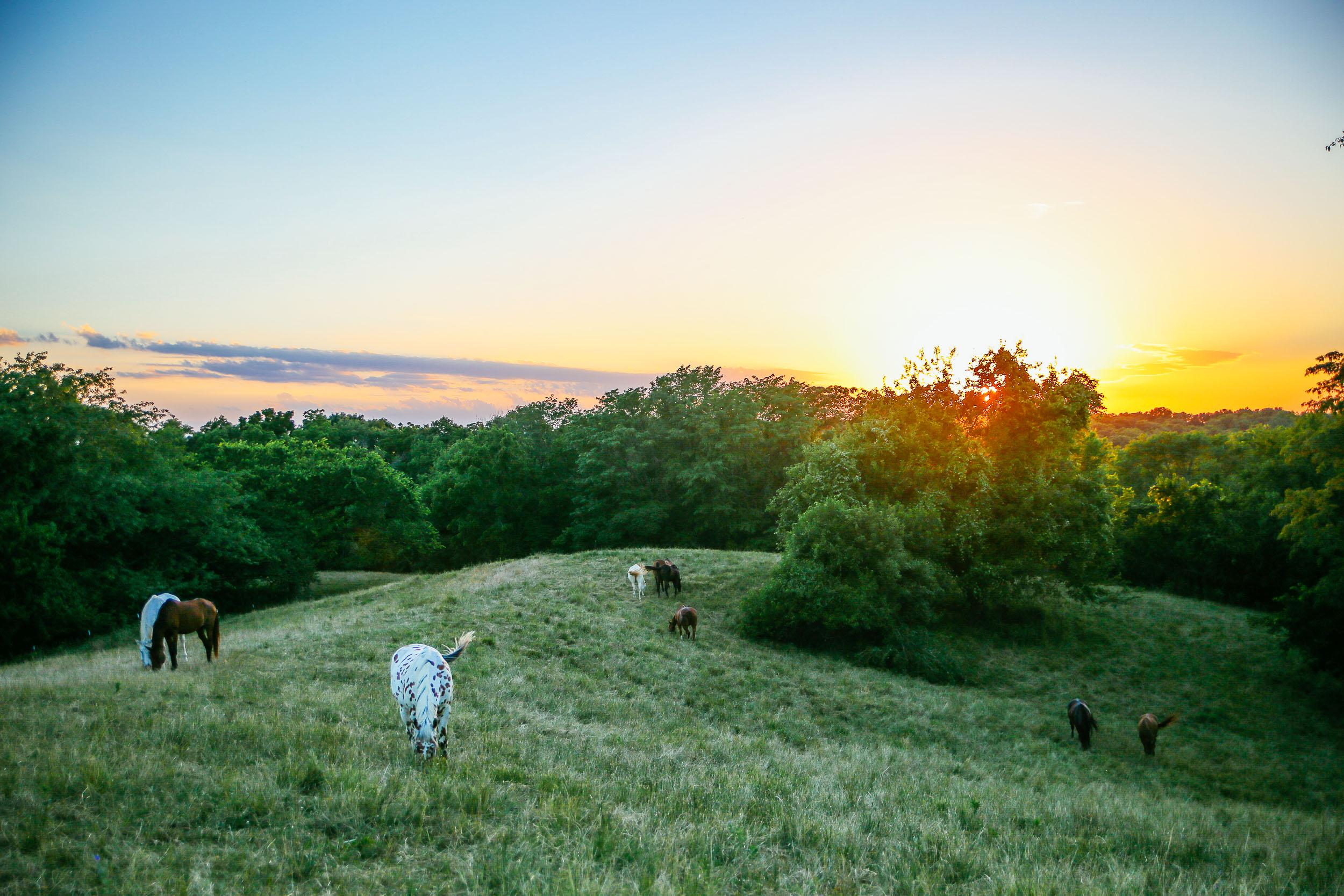Heartland_Horses.jpg