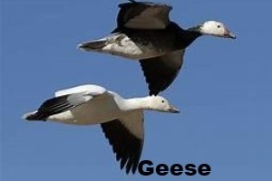 feb2 bird.jpg