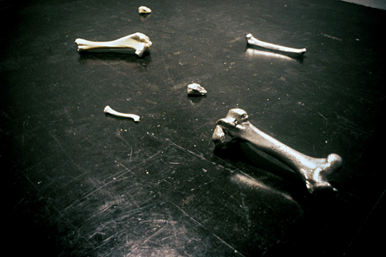 bones-wolves-vancouver-installation-huebner-3.jpg