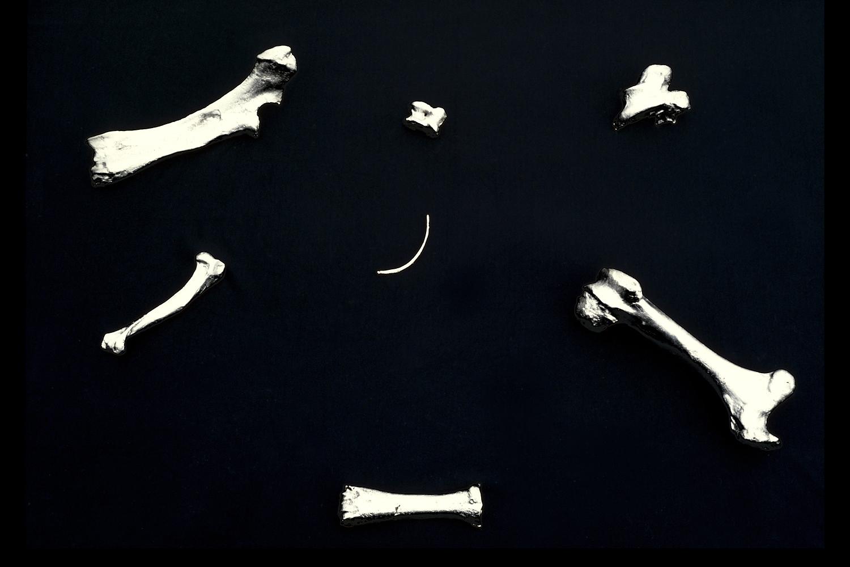 bones-wolves-vancouver-installation-huebner-11.jpg