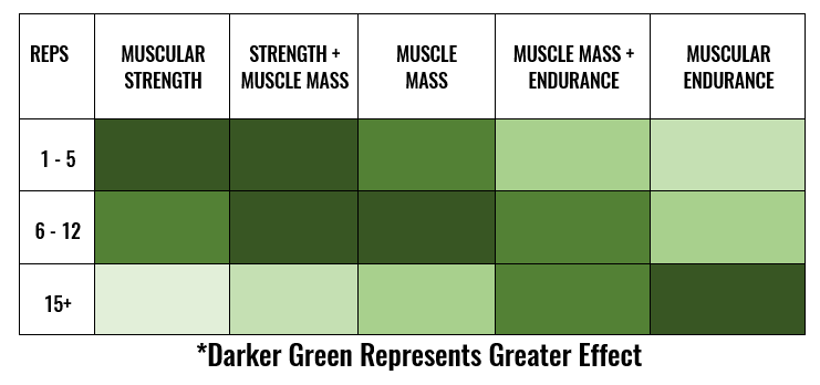 Power- the muscles ability to exert force as quickly as possible  Strength- the muscle's ability to exert force on an external object  Hypertrophy- the development of lean muscle tissue  Endurance- the ability of the muscle to repeatedly exert submaximal force