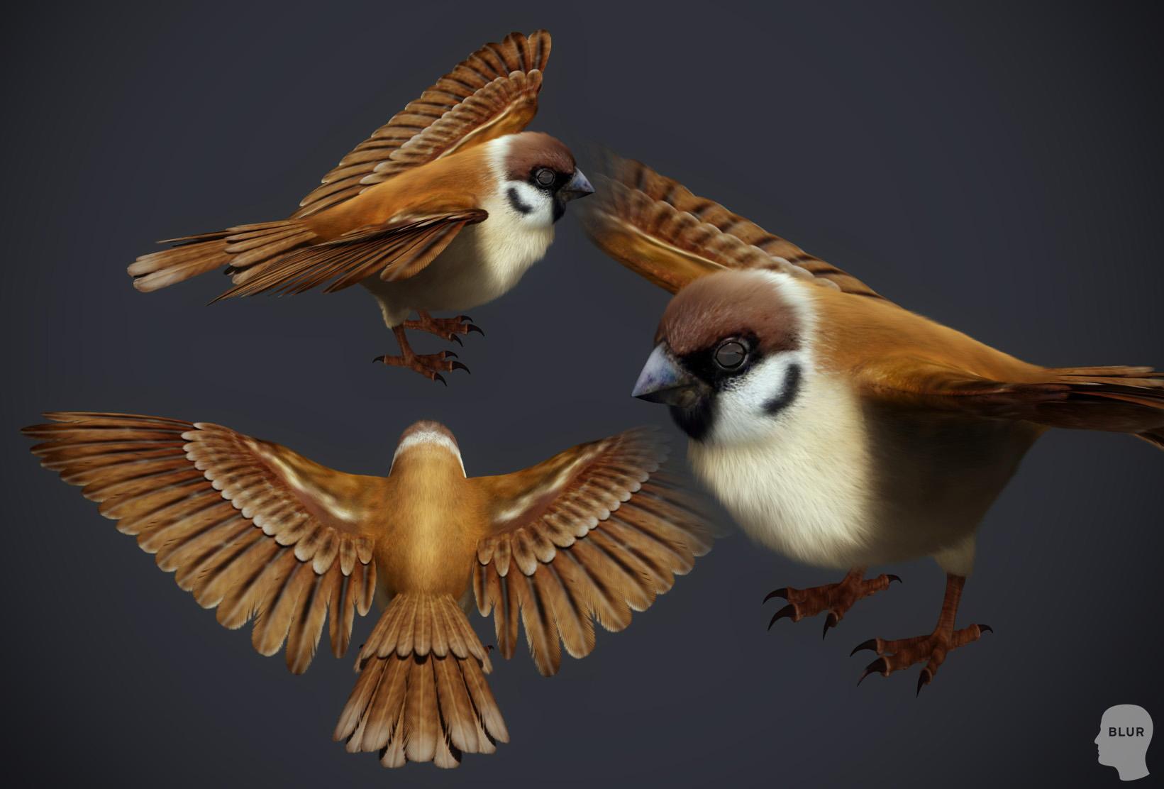 sparrow_sample1.jpg