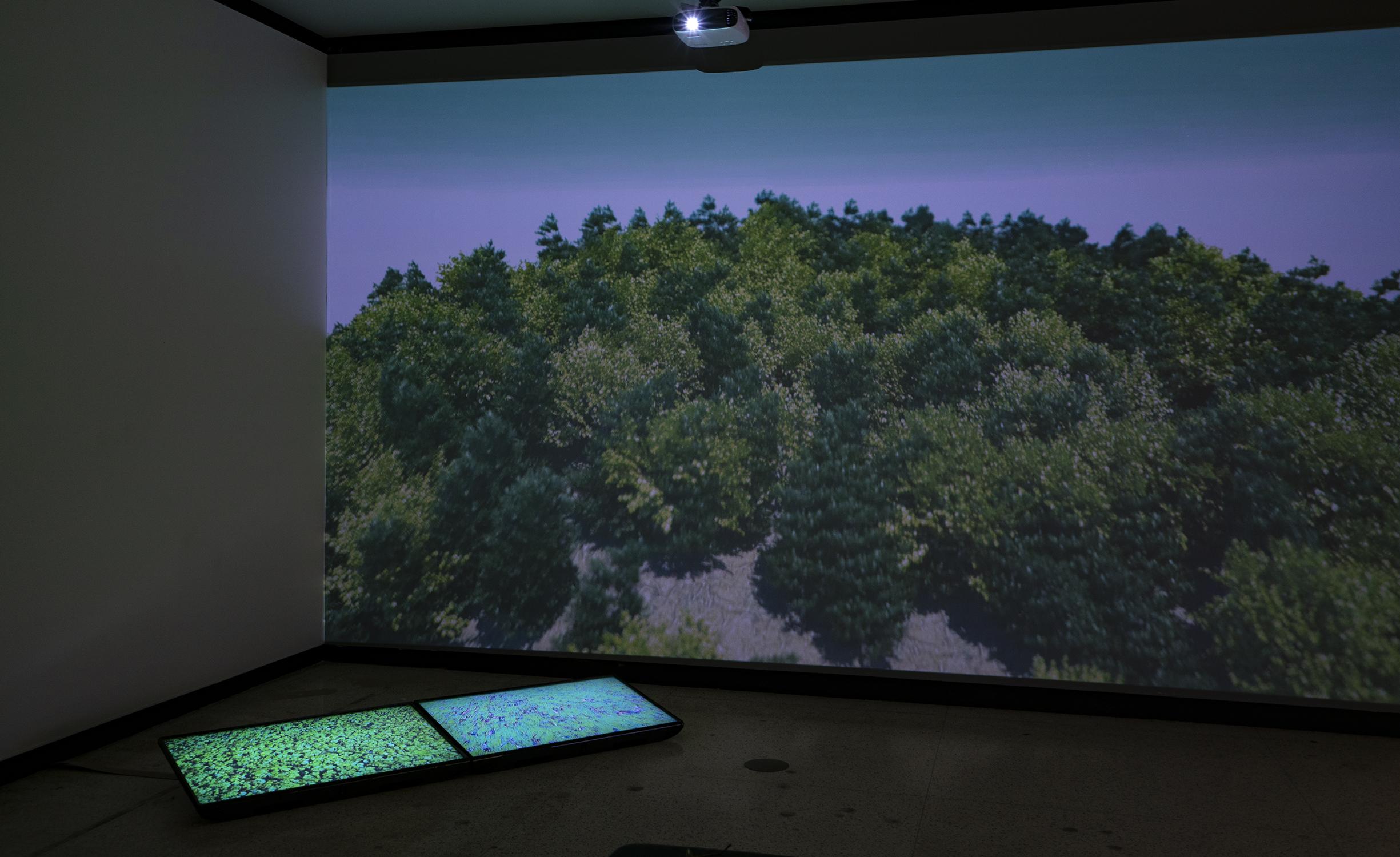 """Solastalgia"" - 5 minute video projection"