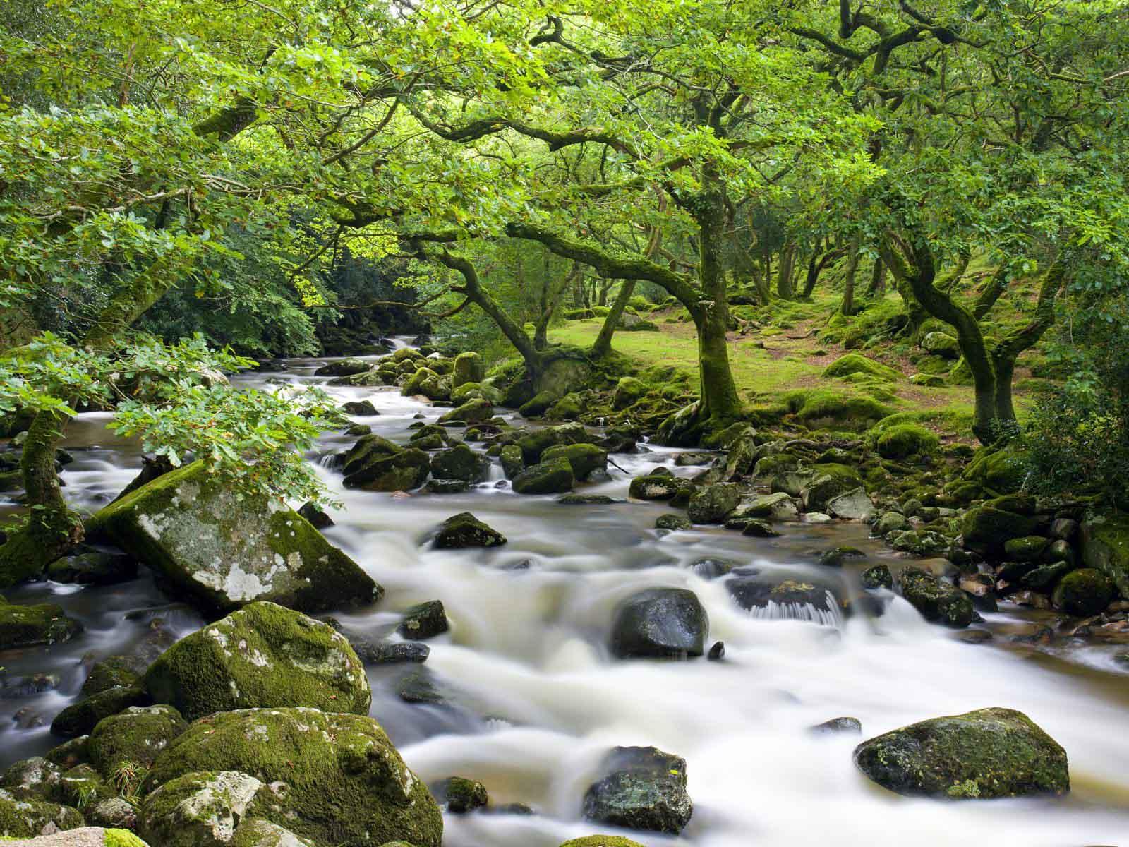 rocky river plym.jpg