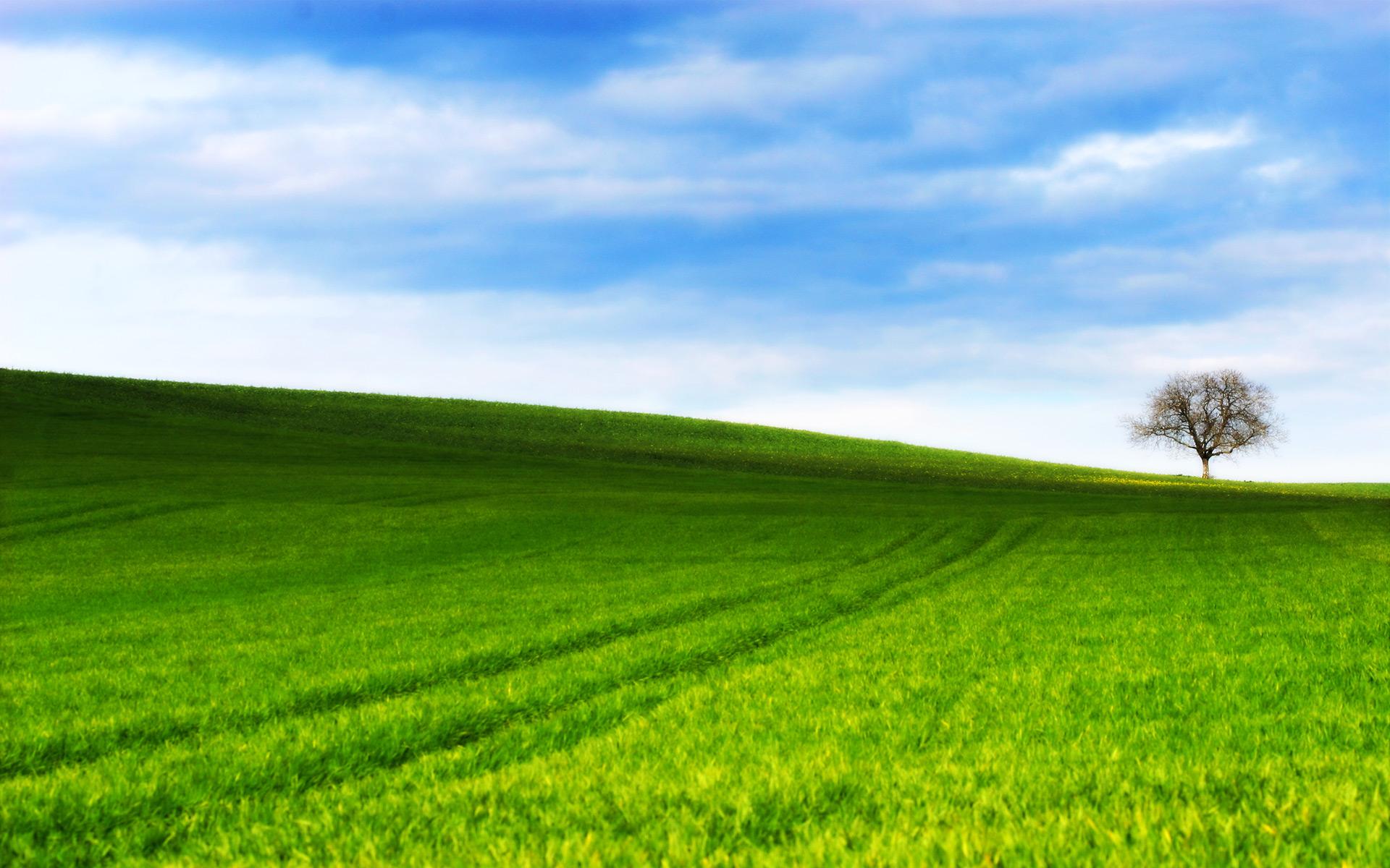Grassy_Hill_by_ryanstfu.jpg