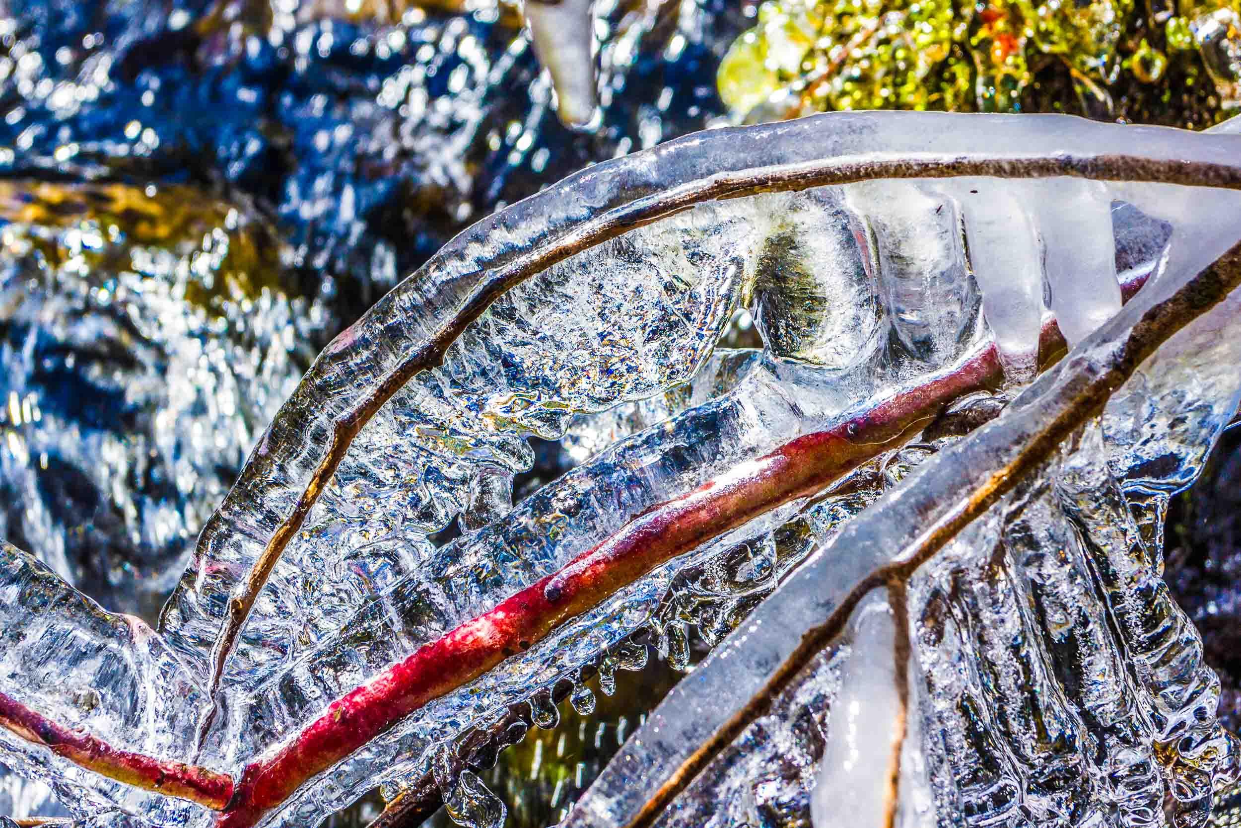 """""""Frozen Twig"""", TN"""