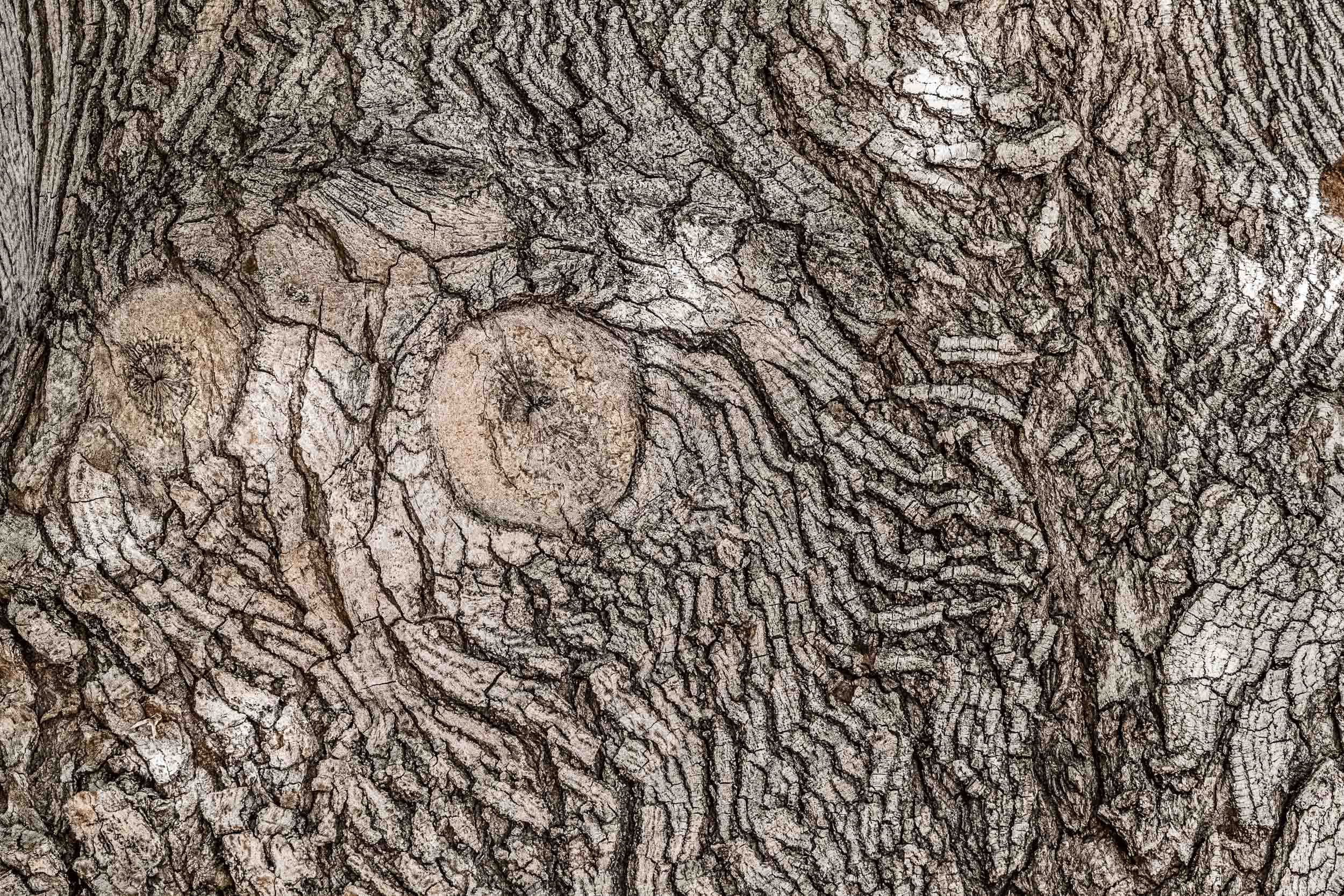 """Wood Owl"", UT"