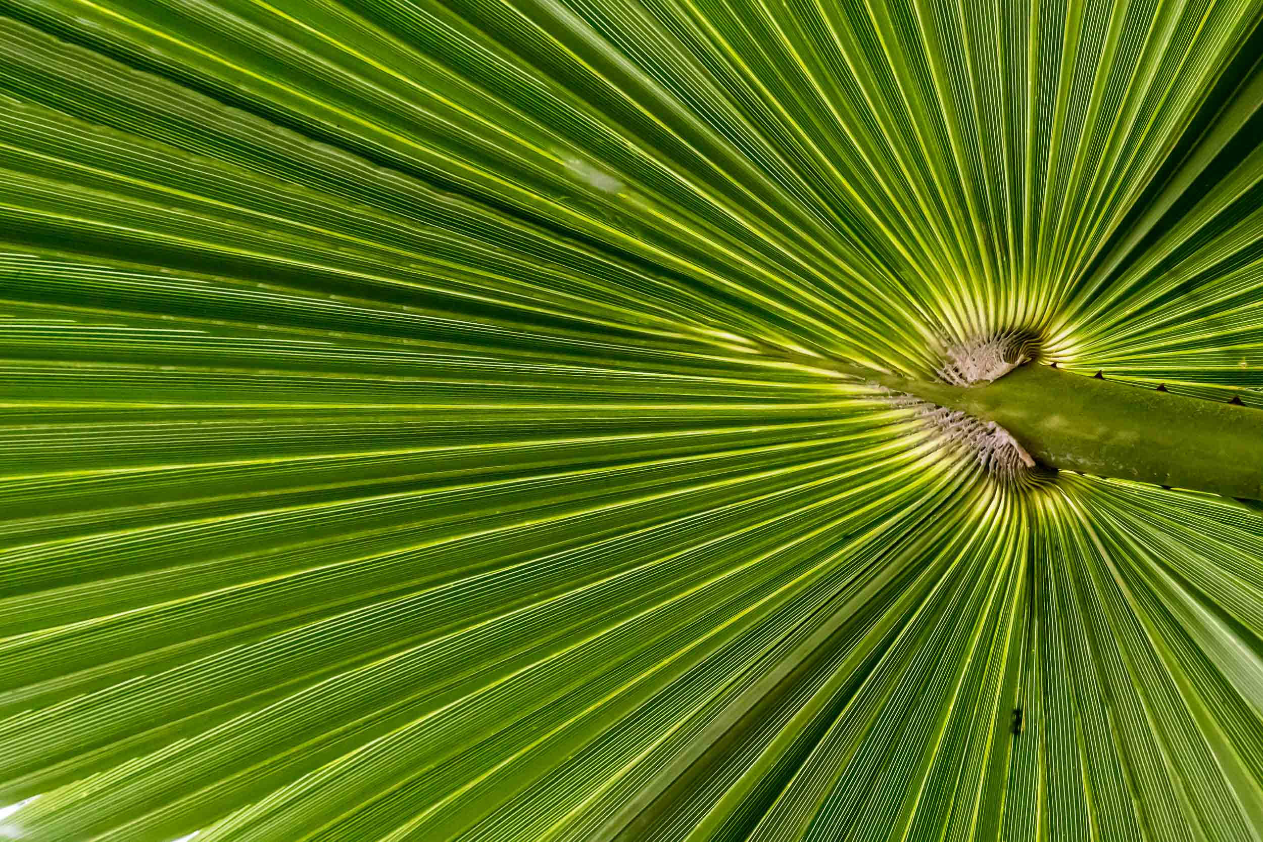 """Palm Leaf"", Tower Hill Botanical Garden"