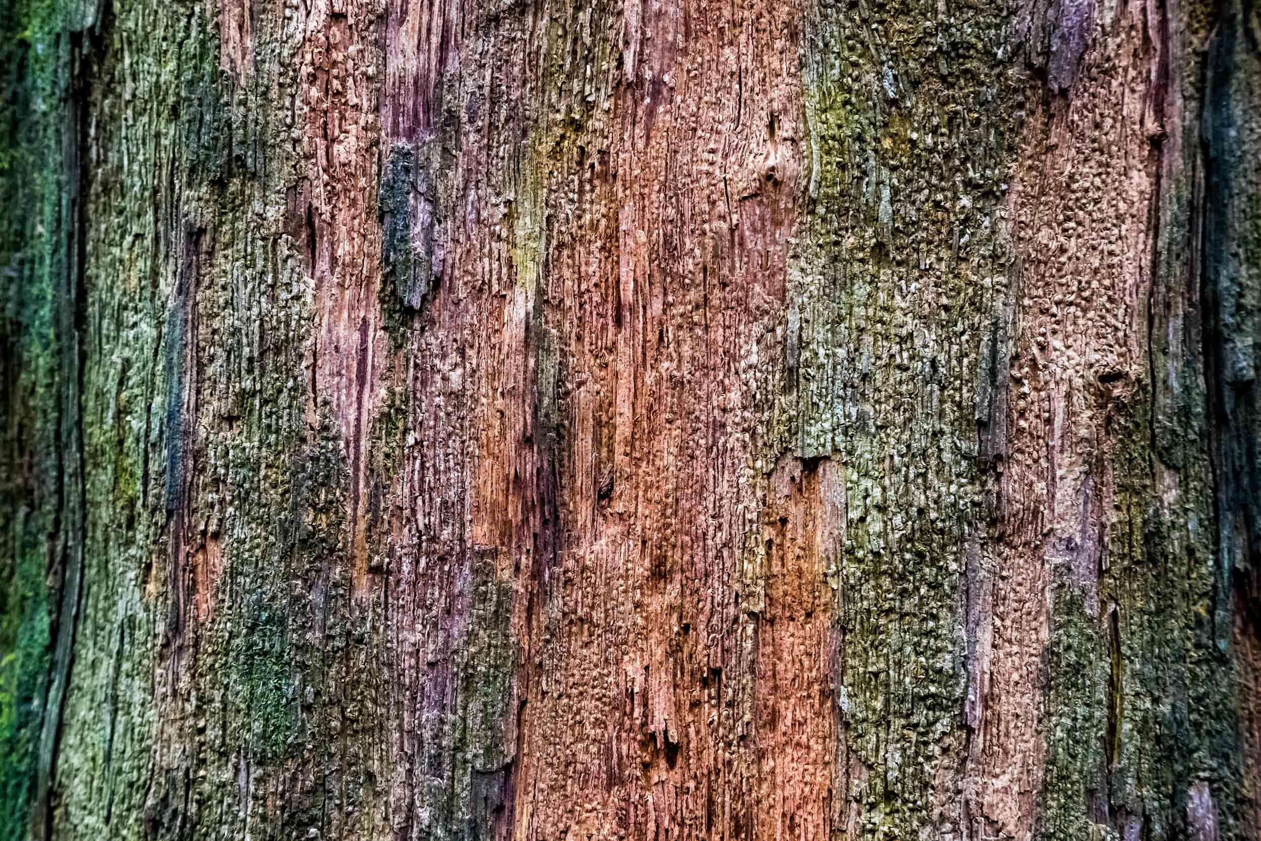 """""""Tree Bark"""", HK"""