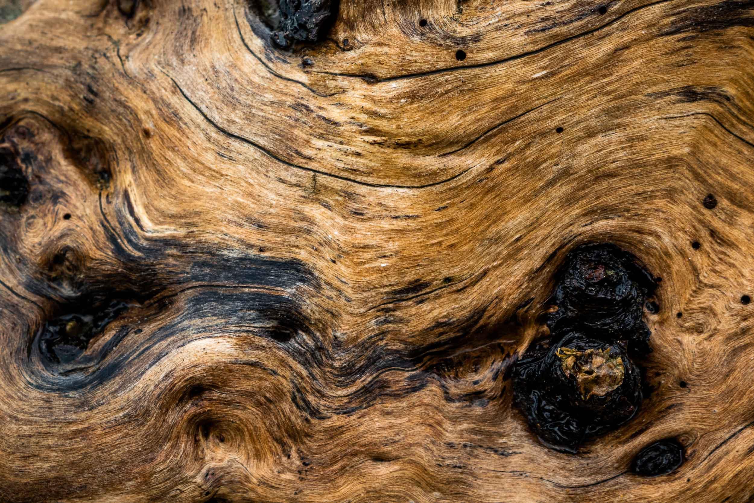 """""""Driftwood I"""", CA"""