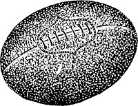 "The football held by Monty Medium when he was ""ambushed"" on the field in 1917.  It is rumored that he still carries it with him on his travels."